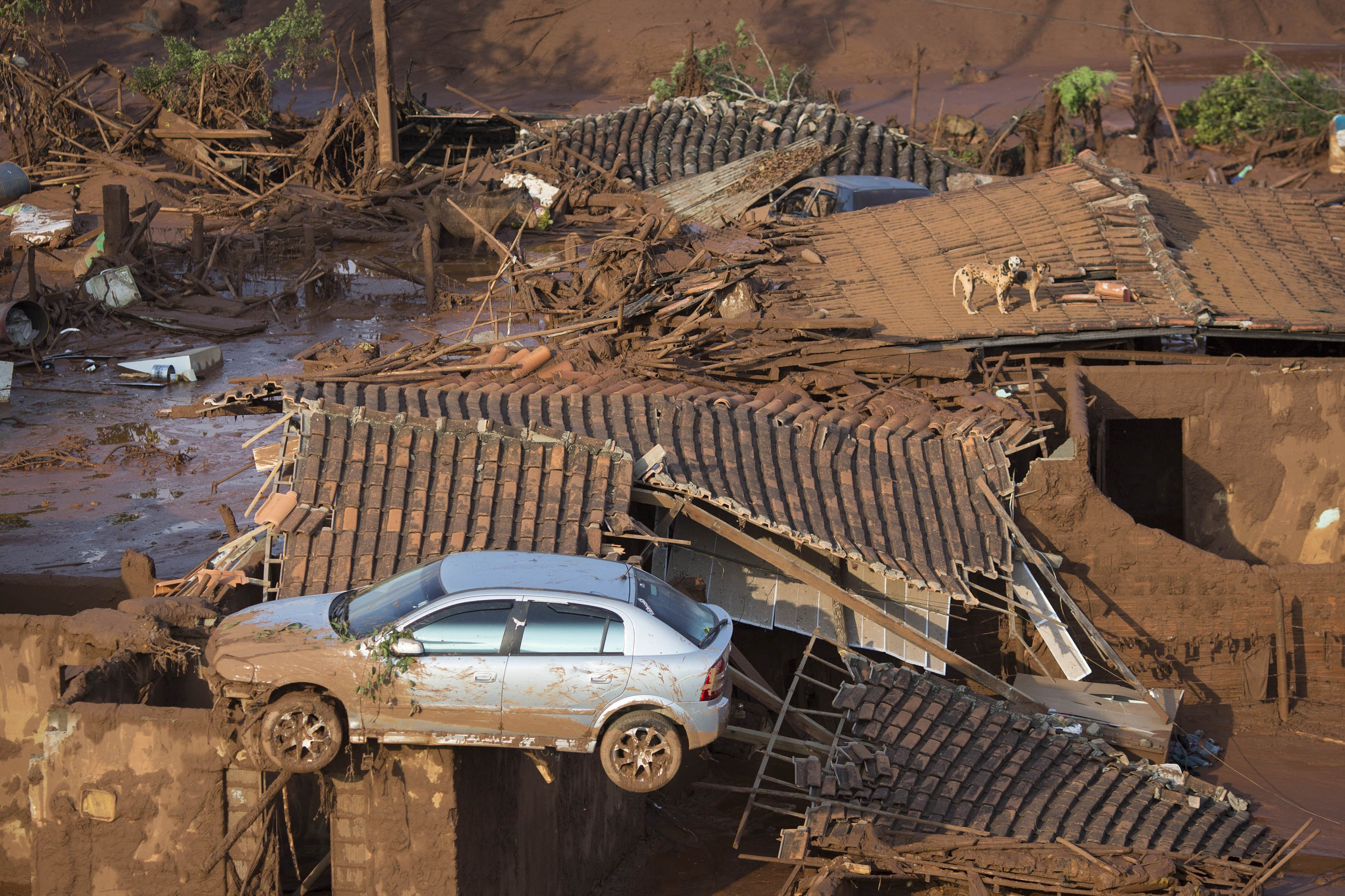 A car and two dogs are seen on the roof of destroyed houses at the small town of Bento Rodrigues after a dam burst in Minas Gerais state, Brazil, on Nov. 6, 2015.