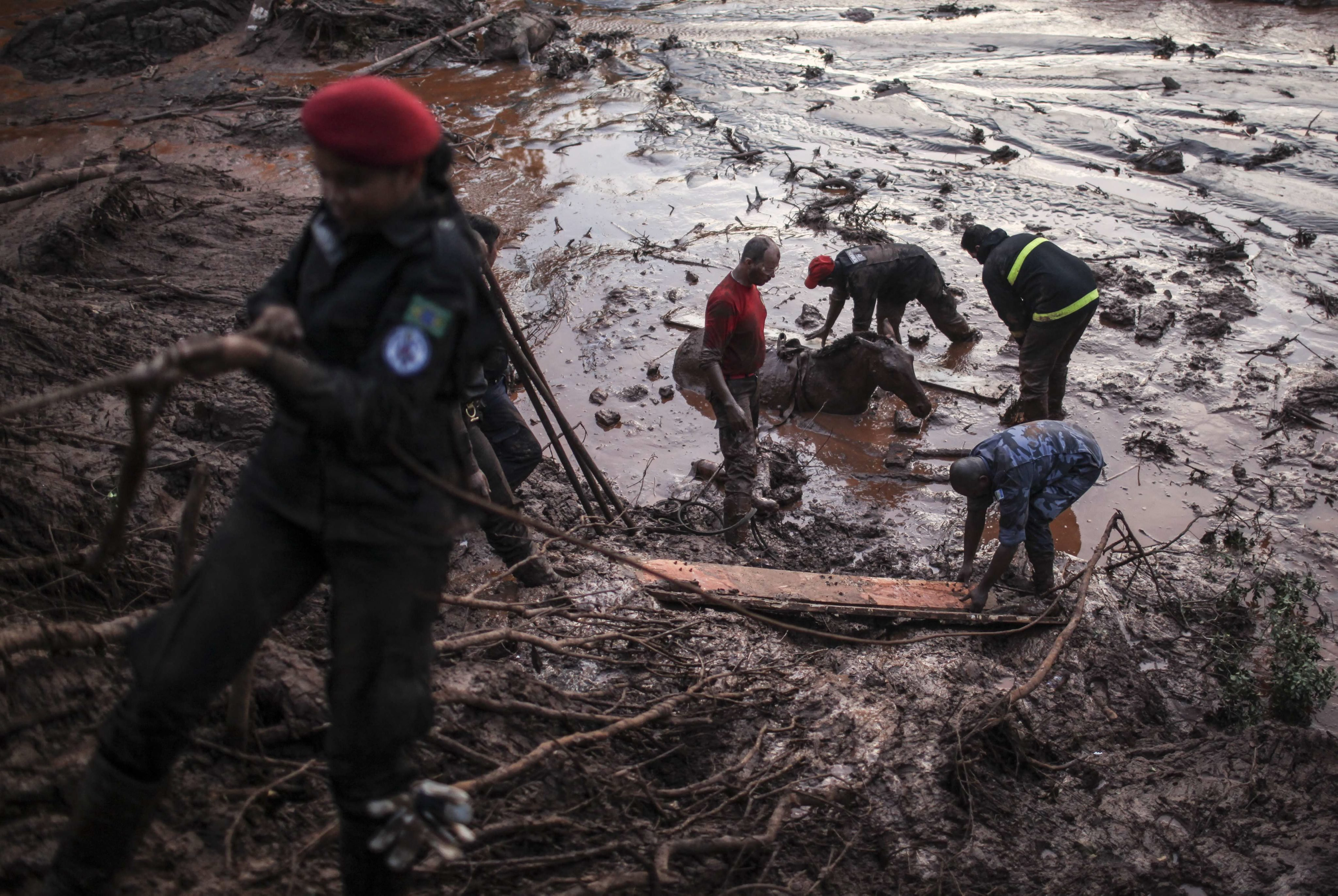 Firefighters try to save a horse that is stuck in the mud after a barrier at an industrial waste site collapsed in Mariana, Brazil on Nov. 6, 2015.