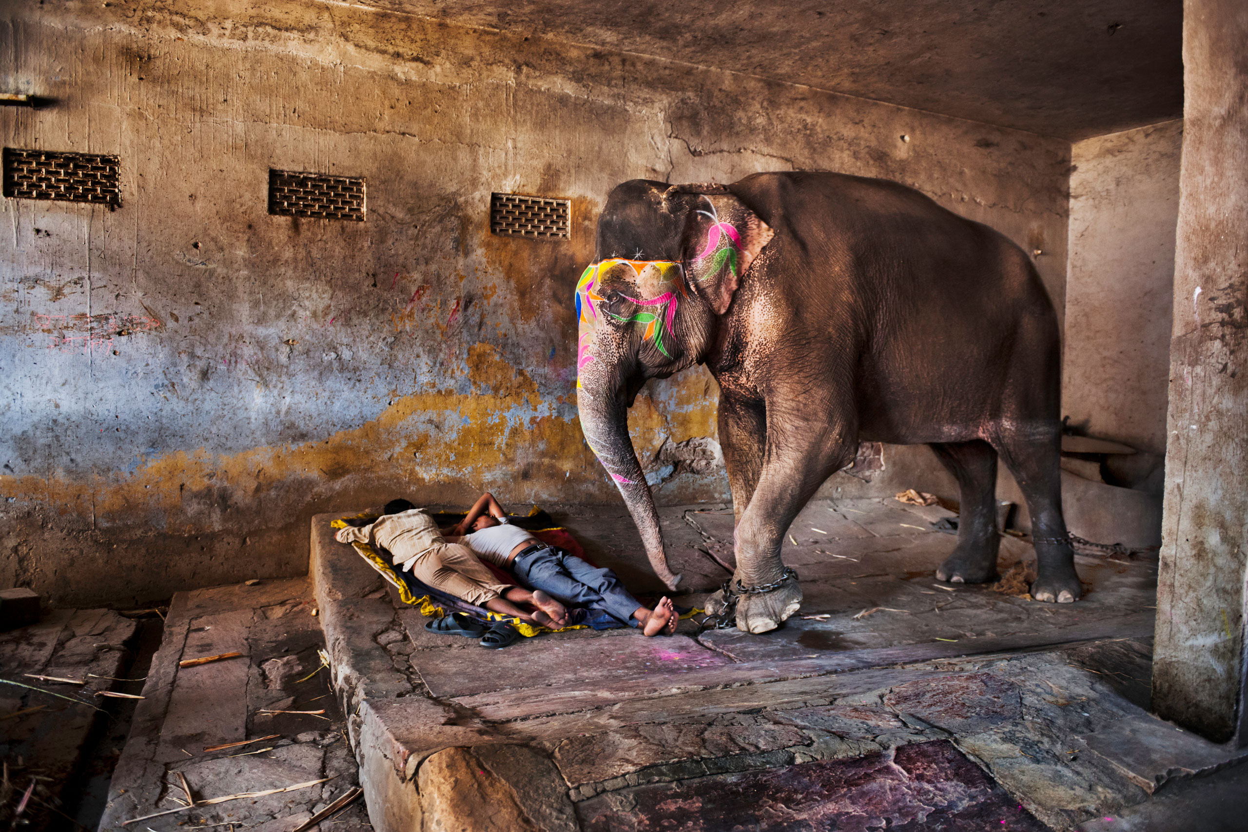 Mahouts sleep with their elephant. Rajasthan, 2012