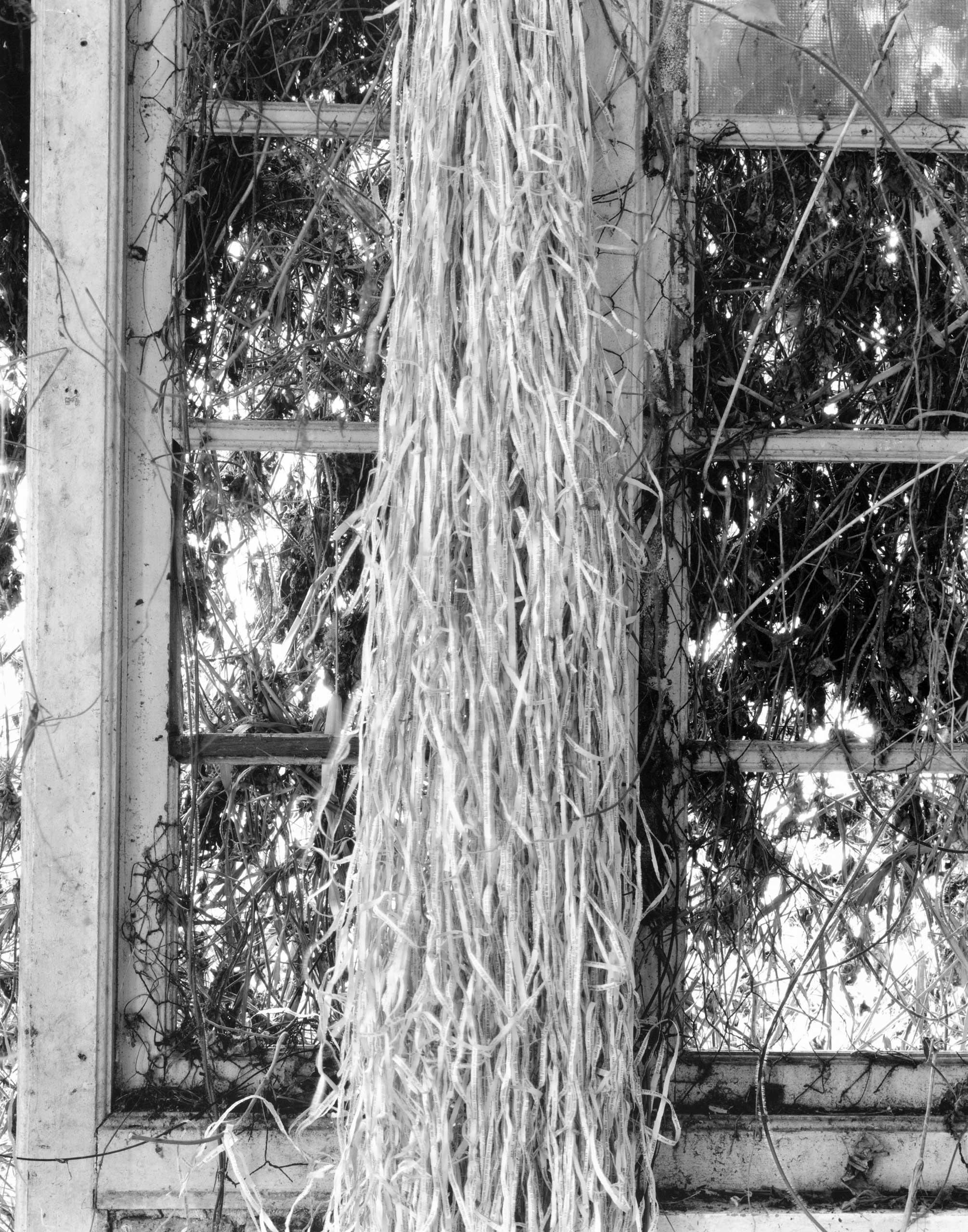 Simryn Gill  Forest #15  1996-98