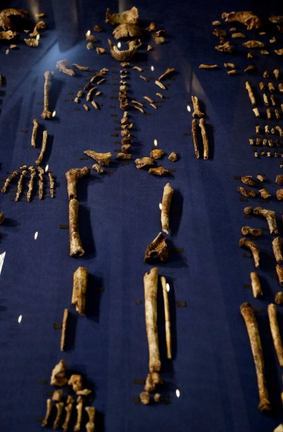 South Africa Human Ancestor