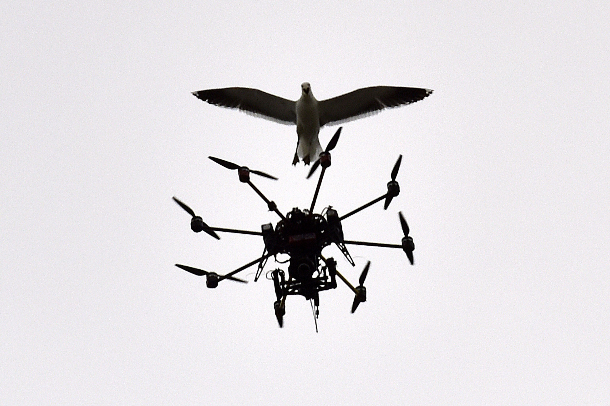A seagull swoops at a Sky TV drone covering the cricket on day five of the second International Test cricket match between New Zealand and Sri Lanka, at the Basin Reserve in Wellington, New Zealand, Jan. 7, 2015.