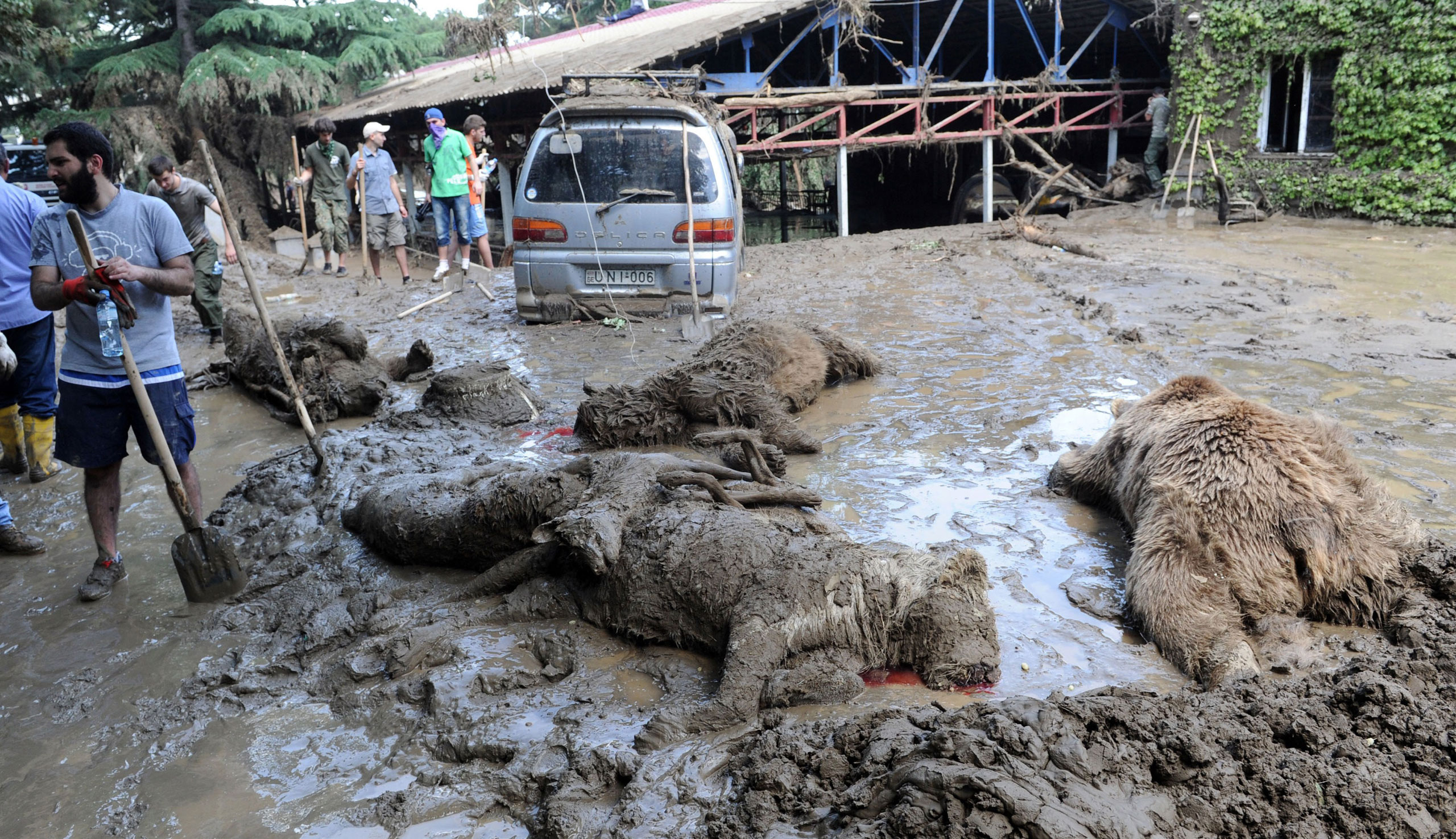 A municipal worker stands near dead animals at a flooded zoo in the Georgian capital Tbilisi, June 15, 2015.