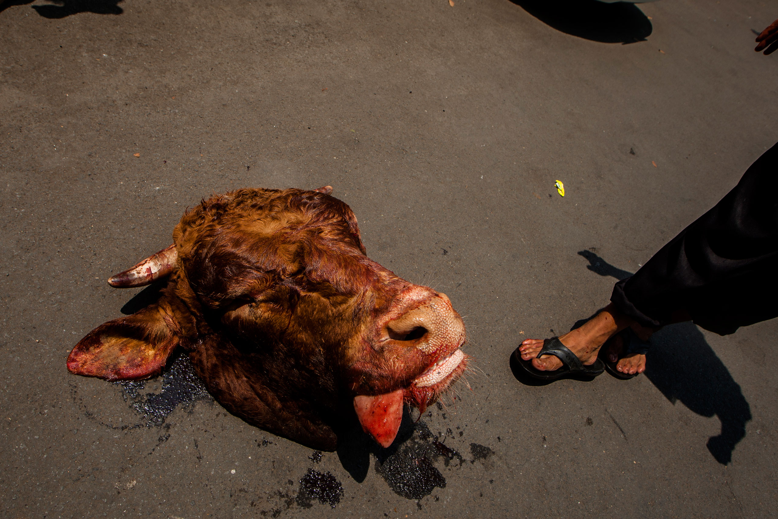 The head of a cow after slaughter is seen during celebrations of Eid al-Adha at Sunda Kelapa Mosque in Jakarta, Indonesia, Sept. 24, 2015