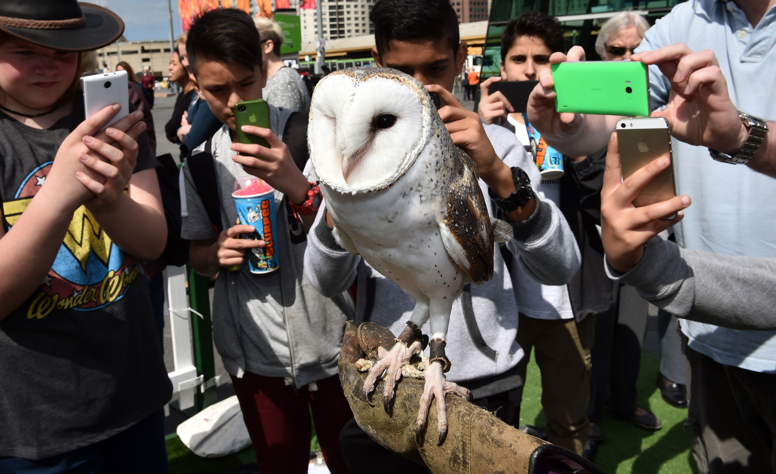 Teenagers take photographs using smartphones of Min Min, a Barn Owl in Melbourne, Australia, Oct. 13, 2015.