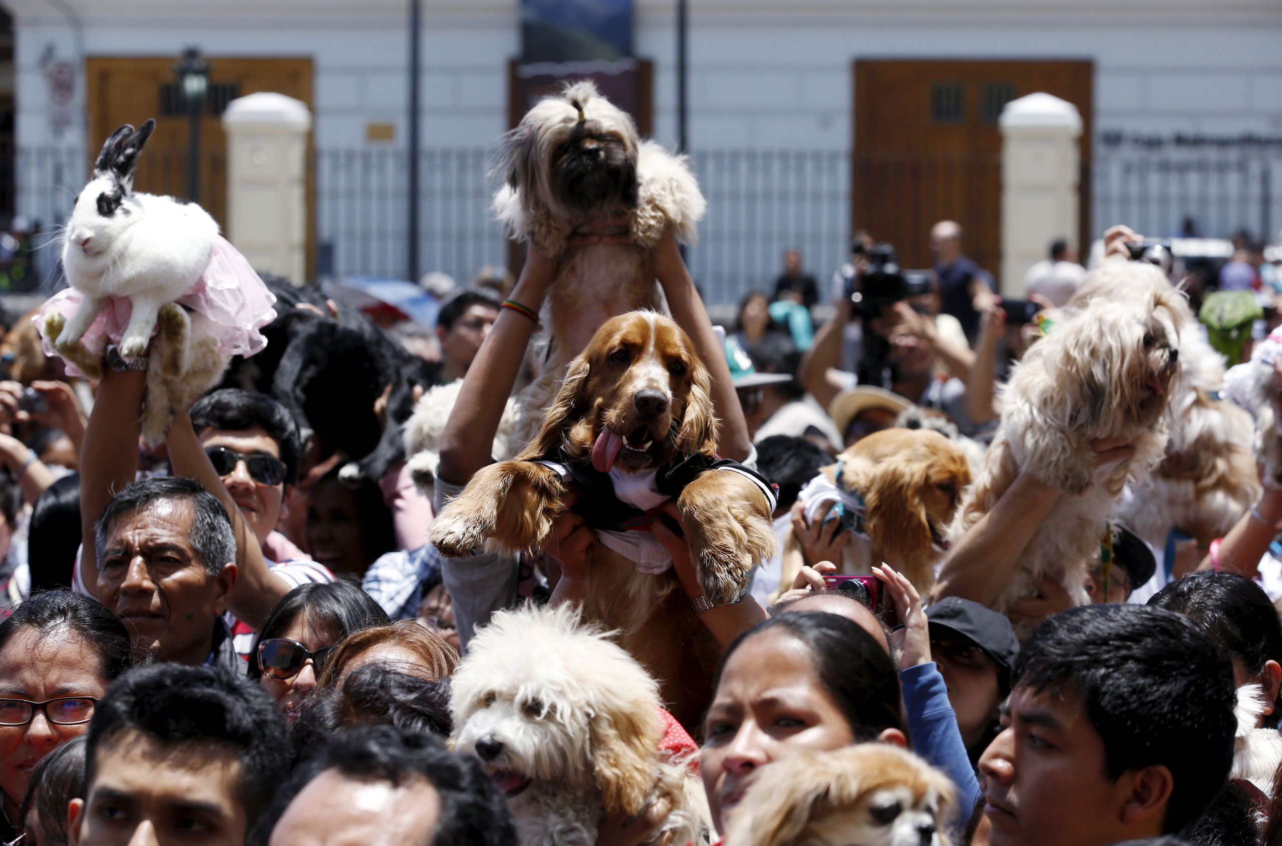 Hundreds of pets get blessed at a religious and blessing ceremony during Saint Francis of Assisi festivities outside the San Francisco church in downtown Lima, Peru, Oct. 4, 2015.