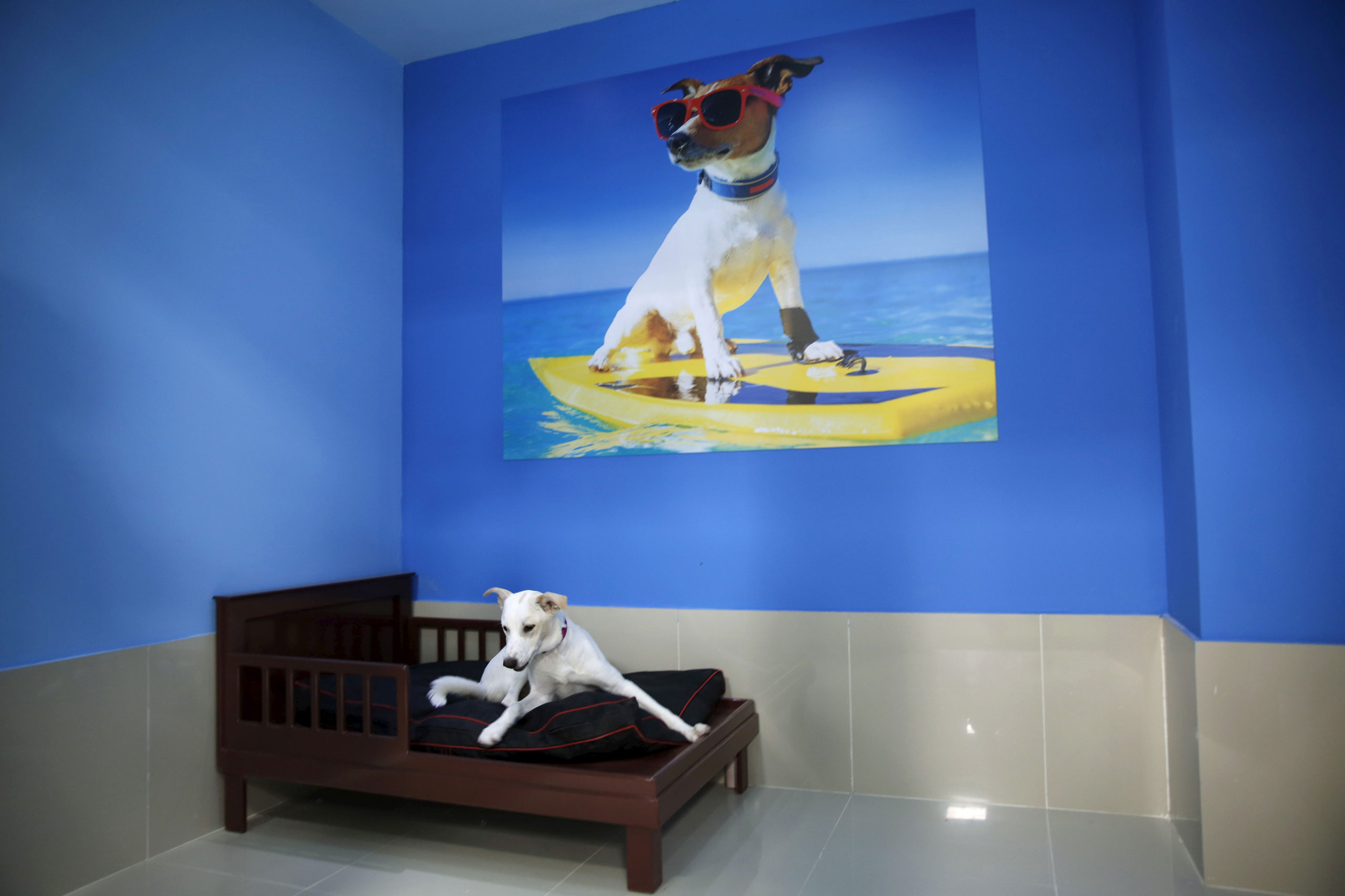 A dog sits on its bed at My Second Home, a newly opened luxury pet resort and spa in Dubai, April 24, 2015.