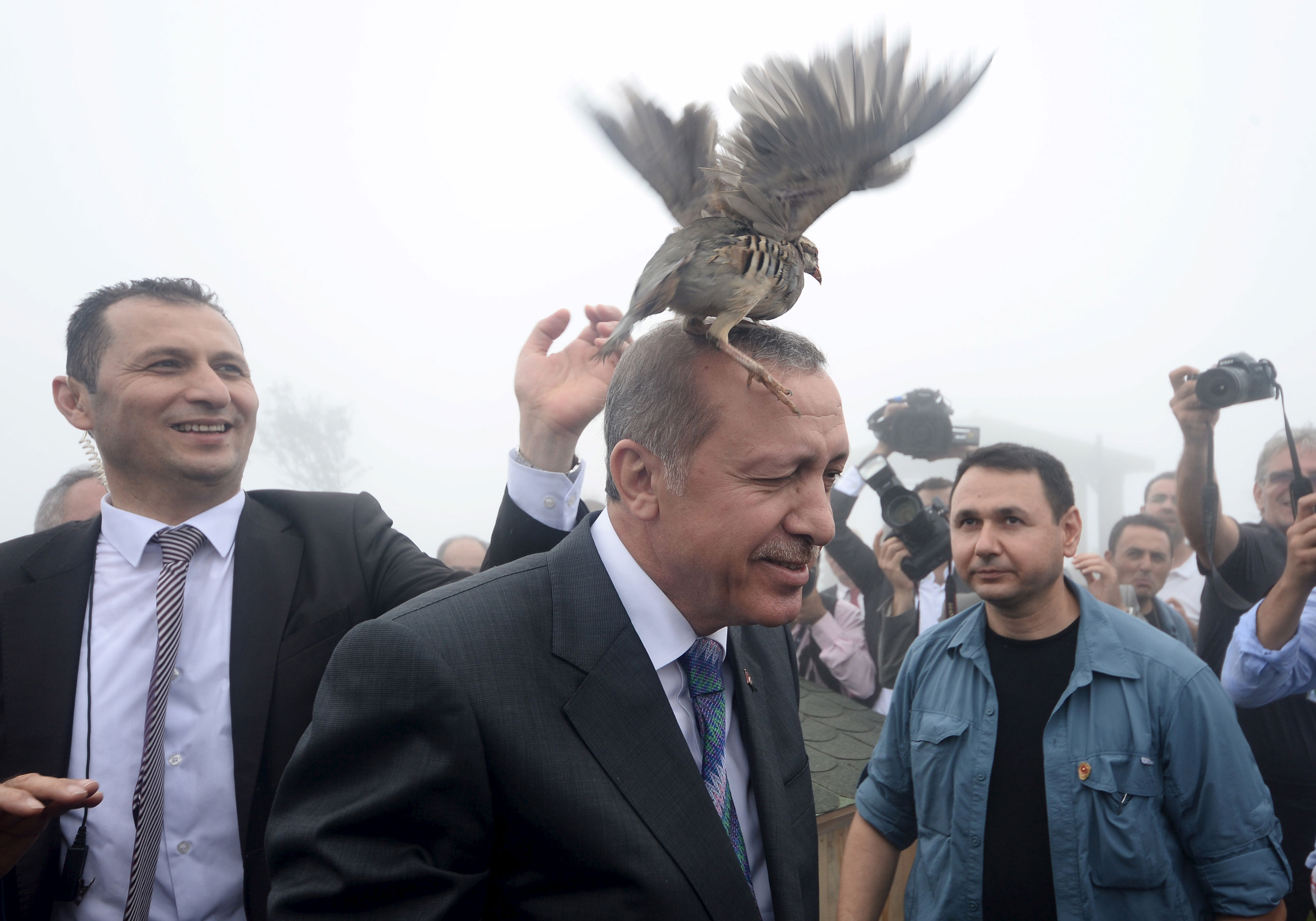 A grouse sits on Turkish President Tayyip Erdogan's head as he visits a facility of the Forest and Water Management Ministry in Rize, Turkey, Aug. 14, 2015.