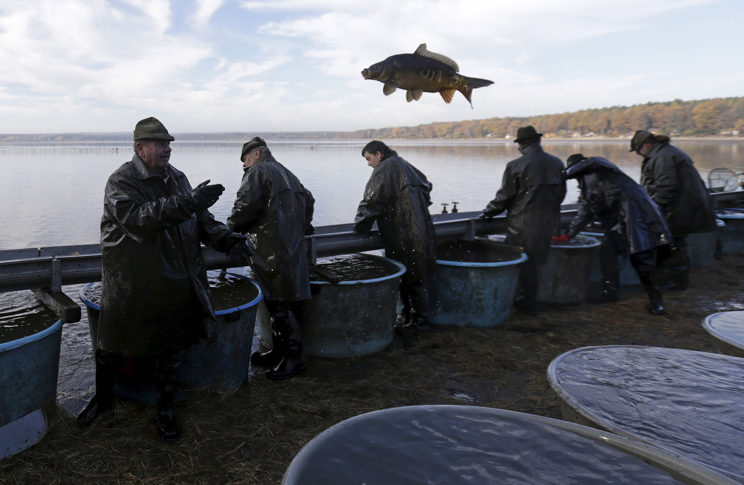 A fisherman throws a fish during the traditional carp haul in the village of Smrzov, near the south Bohemian town of Trebon, Czech Republic, Nov. 2, 2015.