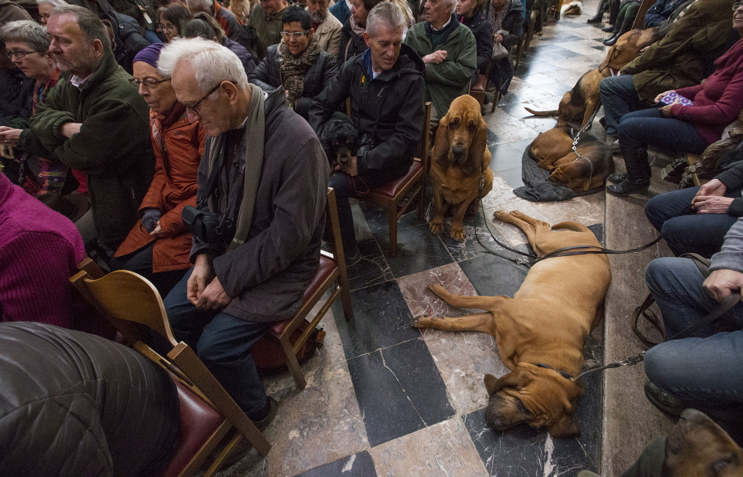 Dogs are seen among faithfuls during a religious service ahead of a blessing ceremony for animals at the Basilica of St. Peter and Paul in Saint-Hubert, Belgium, Nov. 3, 2015. Hundreds of animals get blessed during the celebration of Saint Hubert, the patron saint of hunters who is also invoked for protection of dogs and horses, according to organizers.