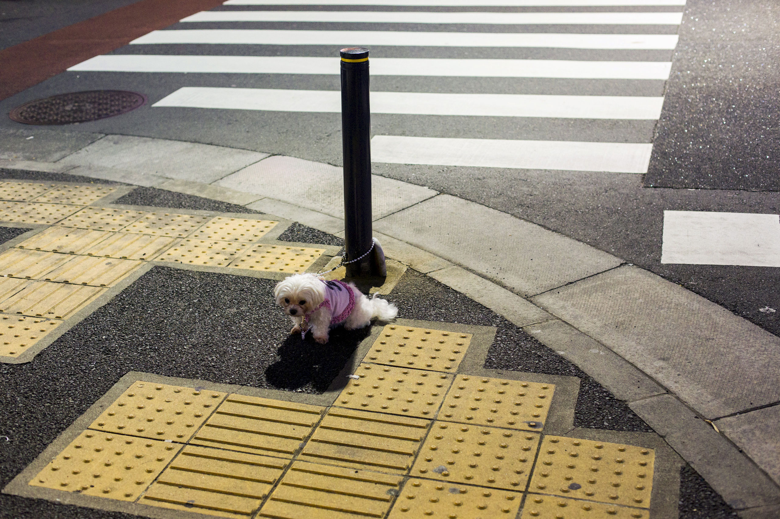 A pet dog is tied to a pole in an empty street as it waits for its owner outside of a shop in Tokyo, Japan, April 23, 2015.