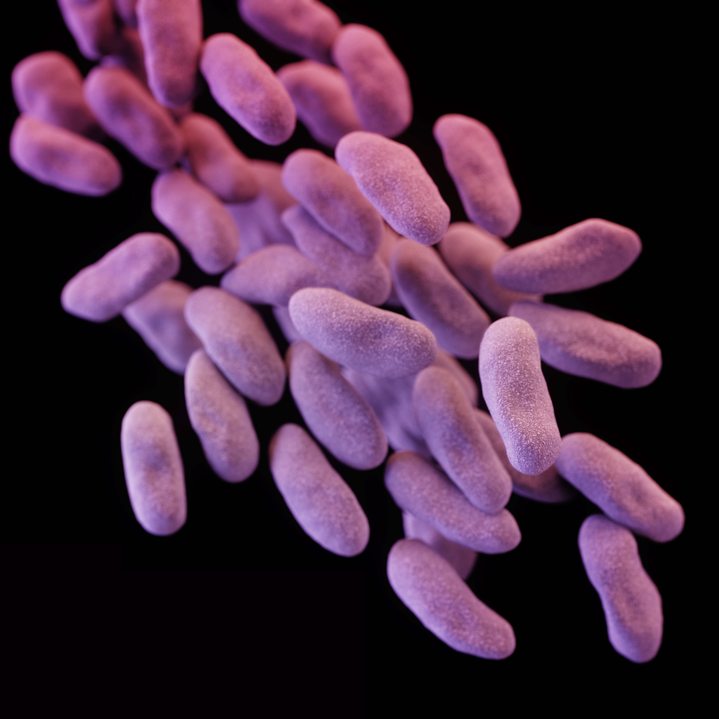 This illustration from the Centers for Disease Control shows a group of CRE bacteria.