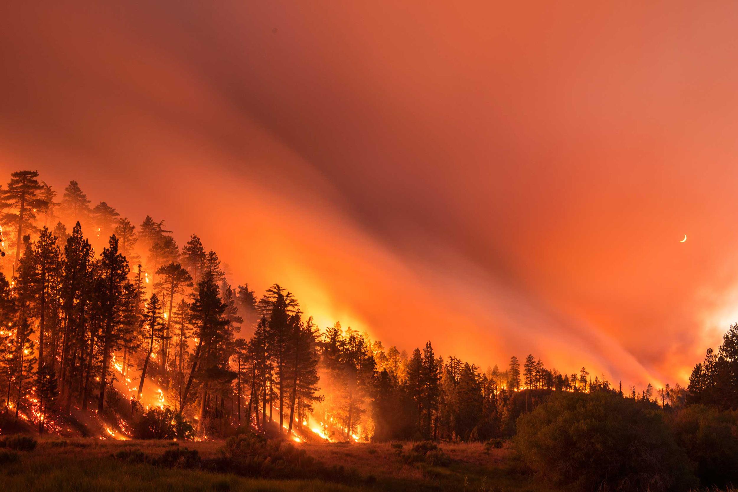 The Lake Fire burns in the San Bernardino National Forest in California on June 18, 2015.
