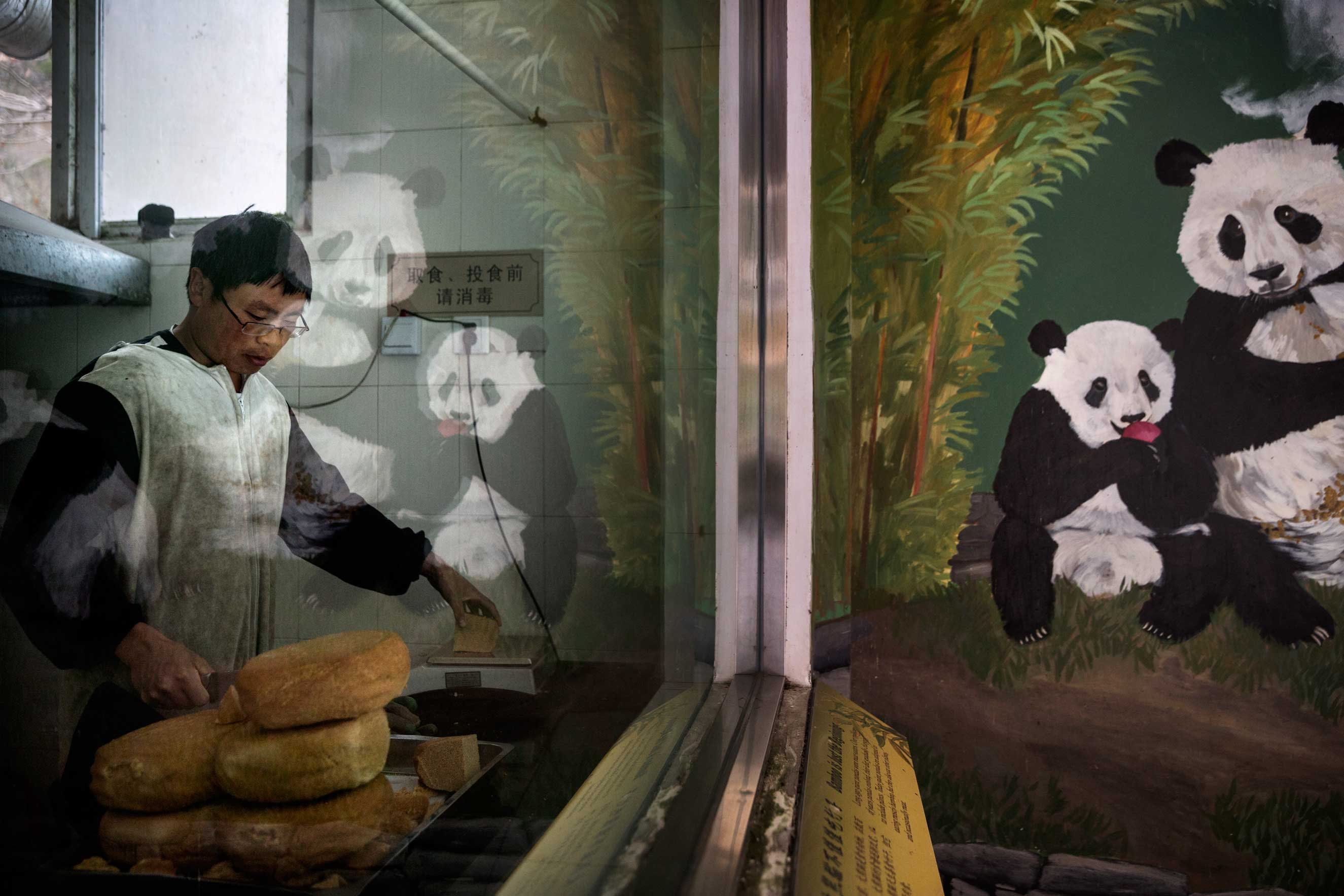 A panda mural is reflected in the window where specially made bread for the pandas is prepared, Dec. 2, 2015.