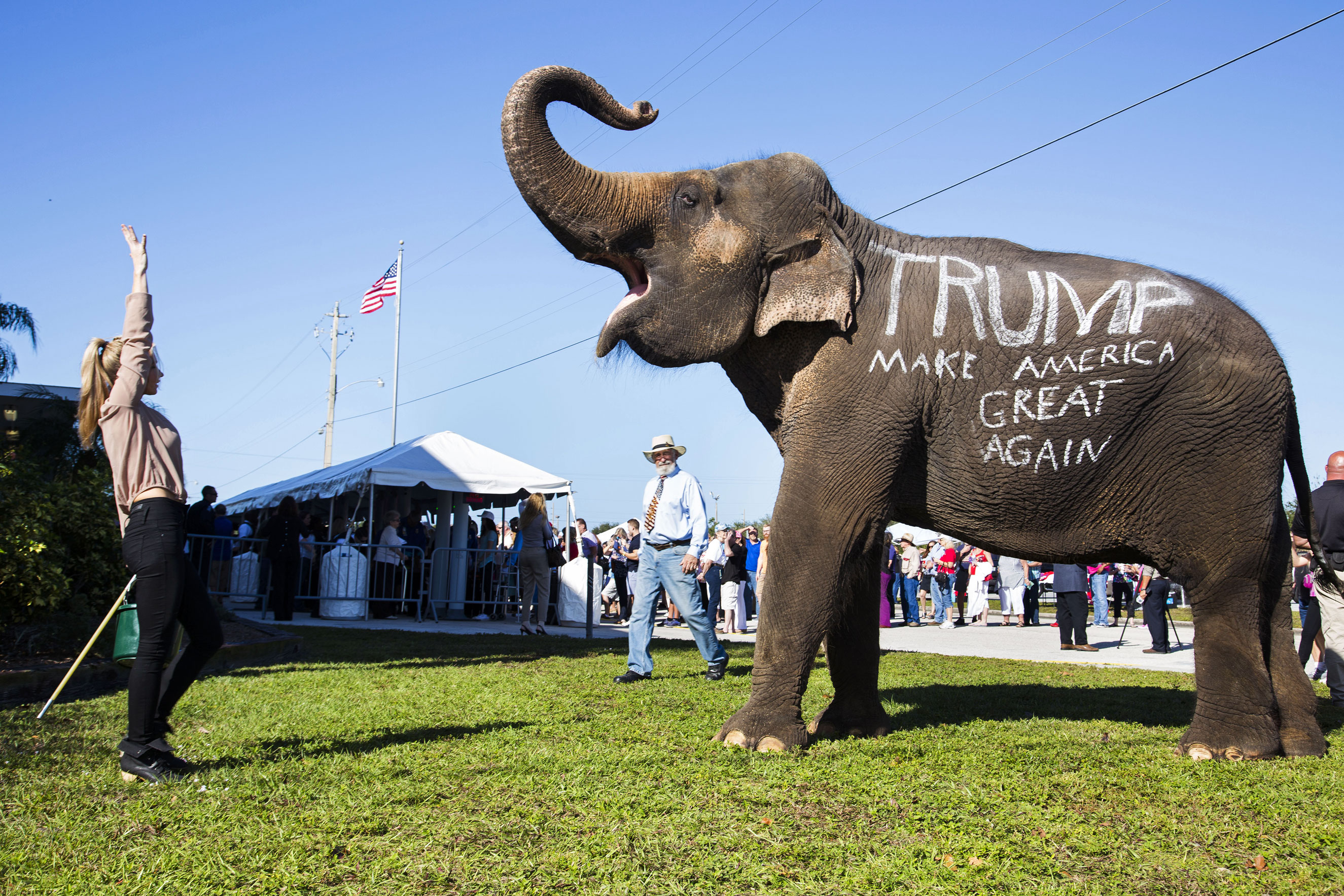 Donald Trump supporters parade an elephant in front of a rally in Sarasota, Fla. Nov. 28, 2015.