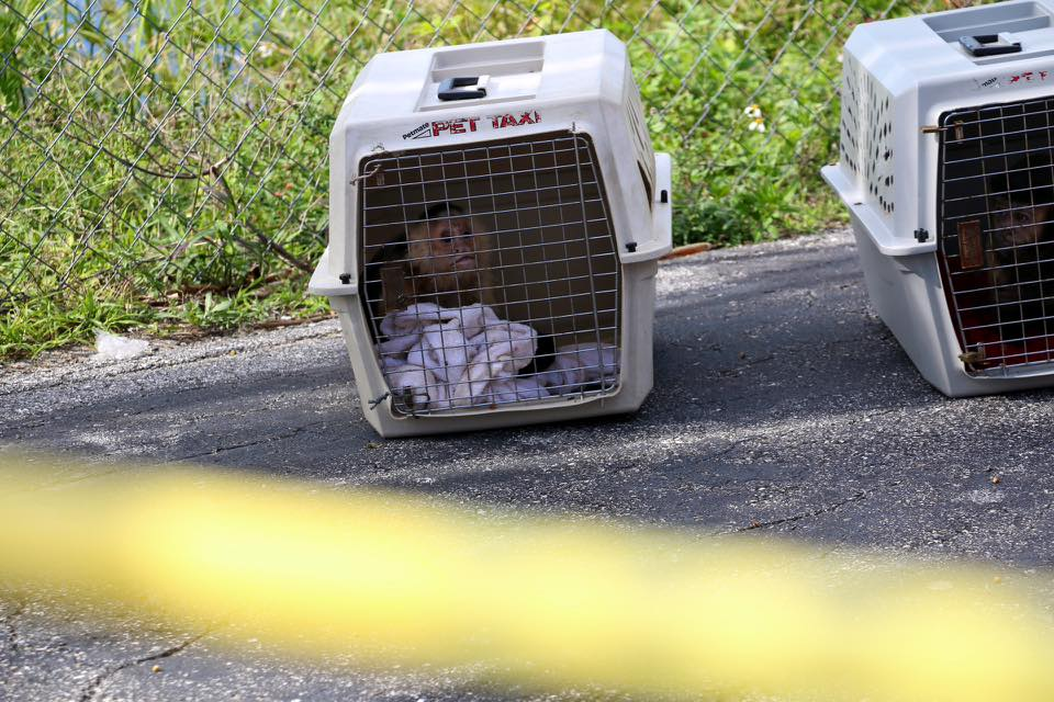 A Florida woman was found dead in Budget Inn motel room with two caged monkeys, authorities said.