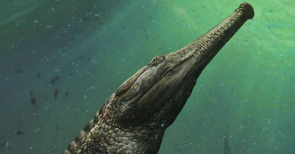 The new Machimosaurus rex species was discovered in the Tunisian desert.