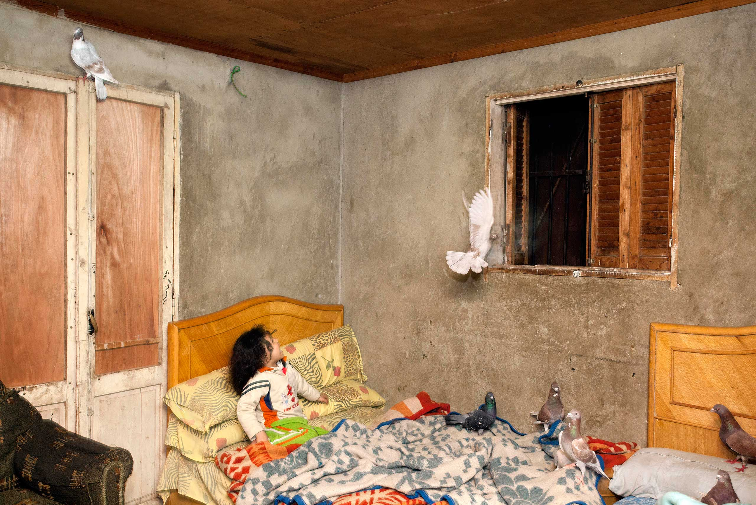 A young girl reacts to a pigeon flying around her room in Cairo, Egypt, March 2012.