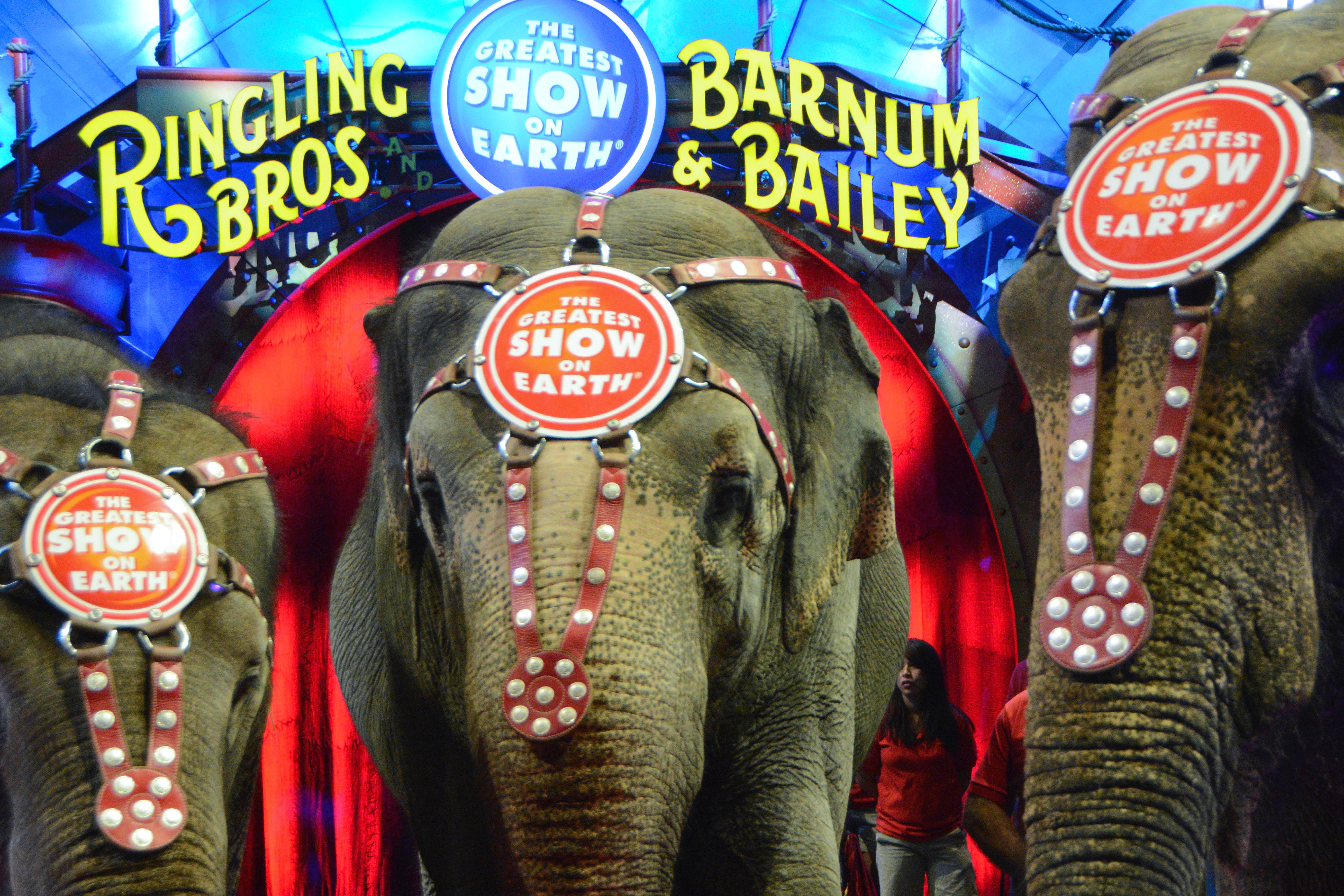LOS ANGELES, CA - JULY 13:  General view of elephants and atmosphere at Ringling Bros. and Barnum & Bailey's 'Circus XTREME' VIP celebrity red carpet premiere at Staples Center on July 13, 2015 in Los Angeles, California.
