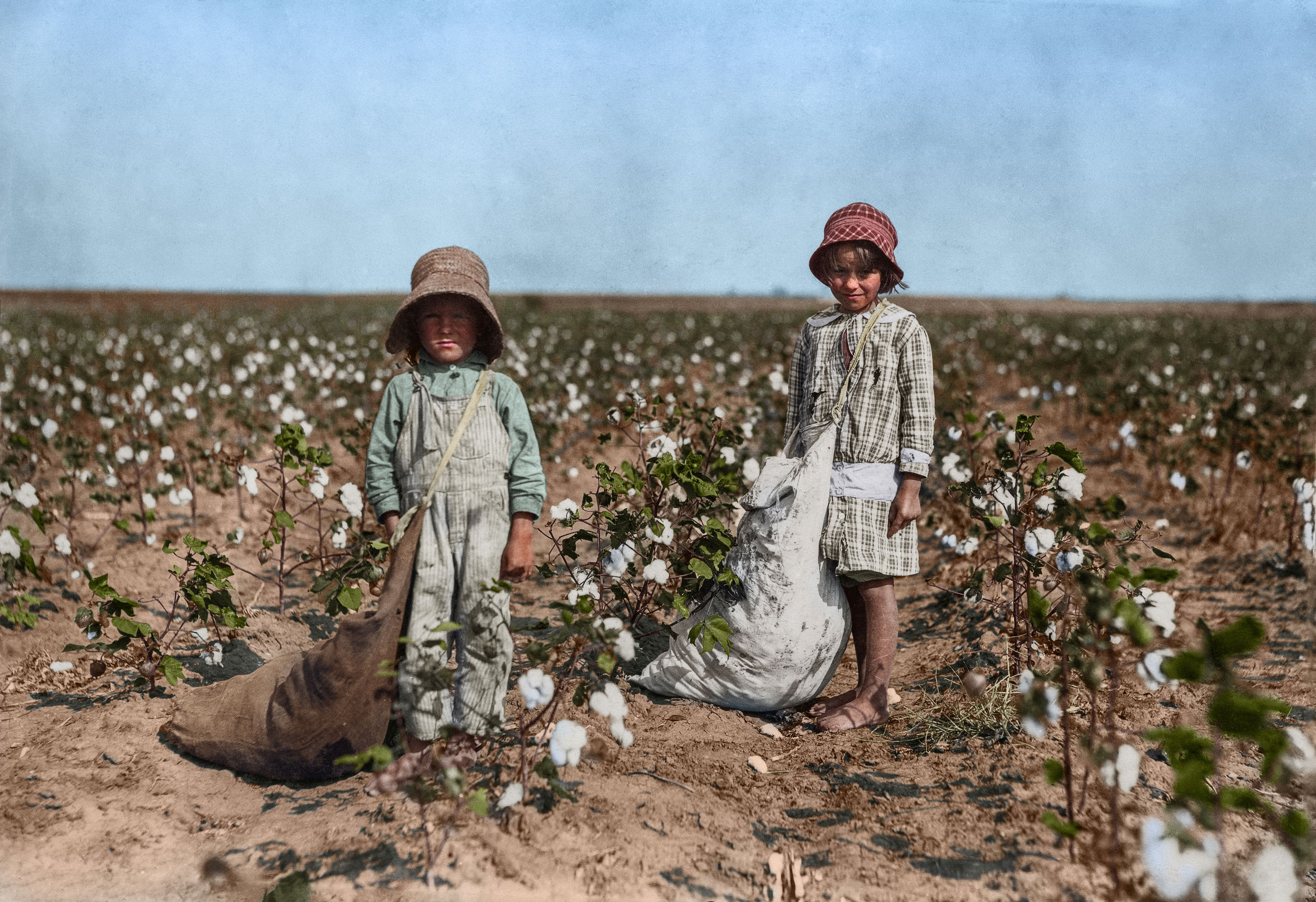 Jewel and Harold Walker, 6 and 5 years old, pick 20 to 25 pounds of cotton a day. Father said:  I promised em a little wagon if they'd pick steady, and now they have half a bagful in just a little while.  Oct. 1916. Comanche County [Geronimo], Oklahoma.