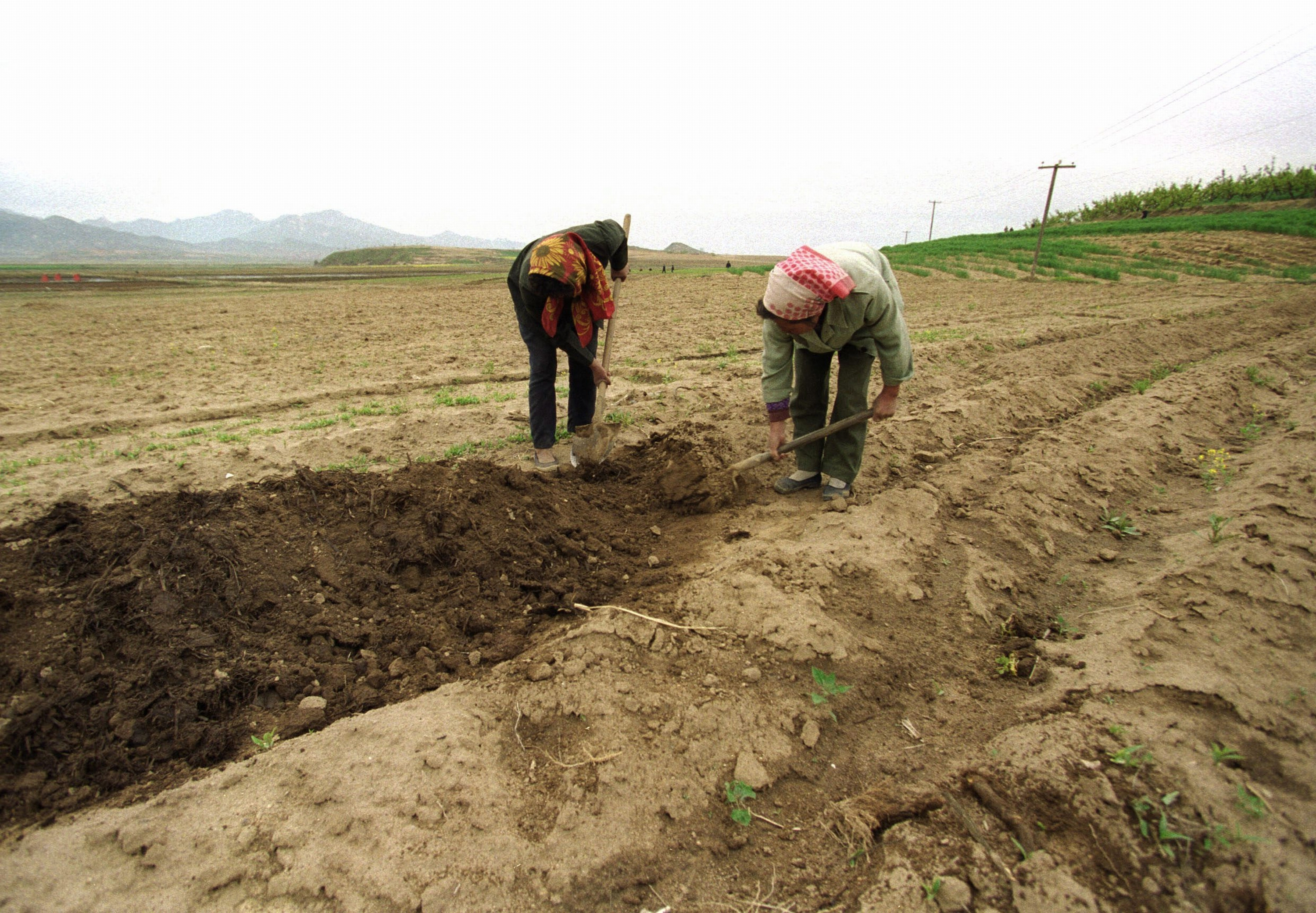 Women work in the fields in North Korea in this undated photograph.