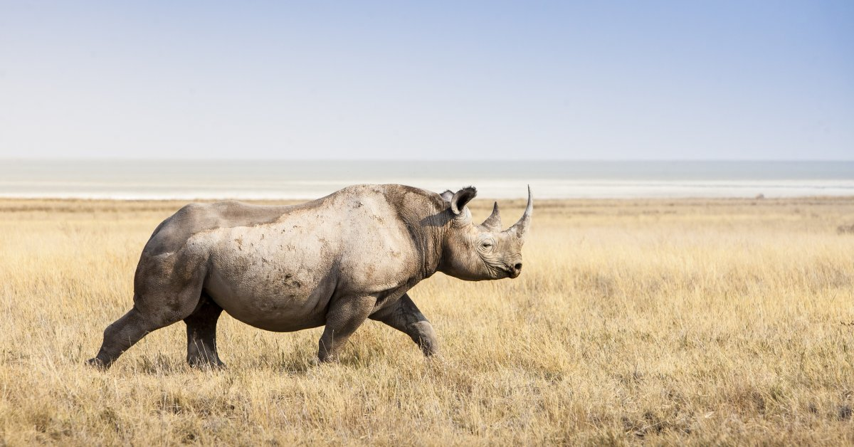 Legalizing the Rhino Horn Market