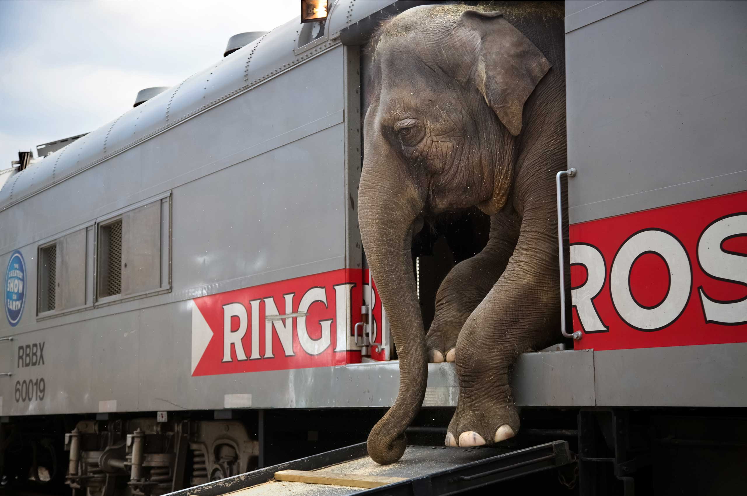 An elephant making its way toward the arena. The elephants will be retired from the circus in 2018.