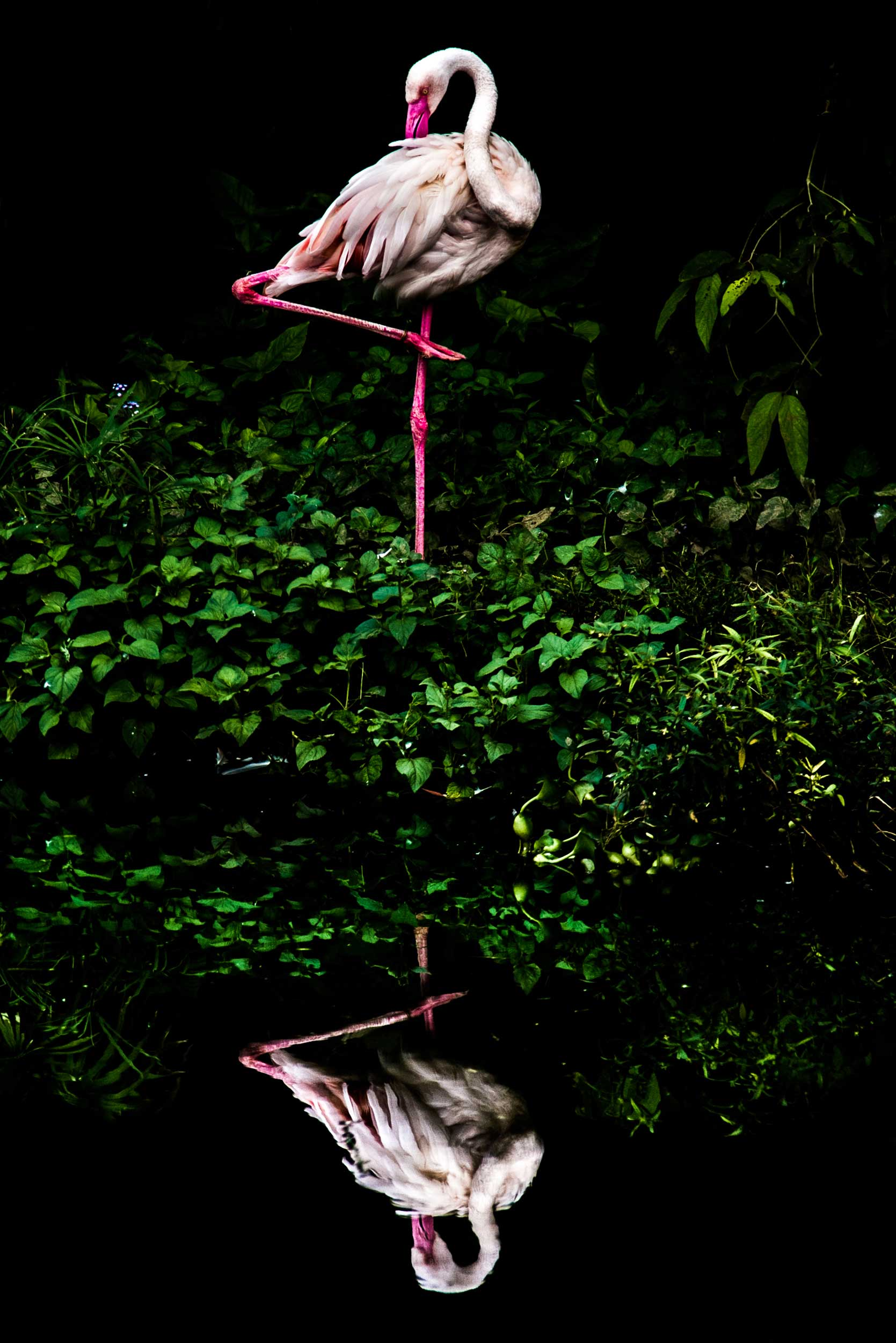 Cloud Flamingo.