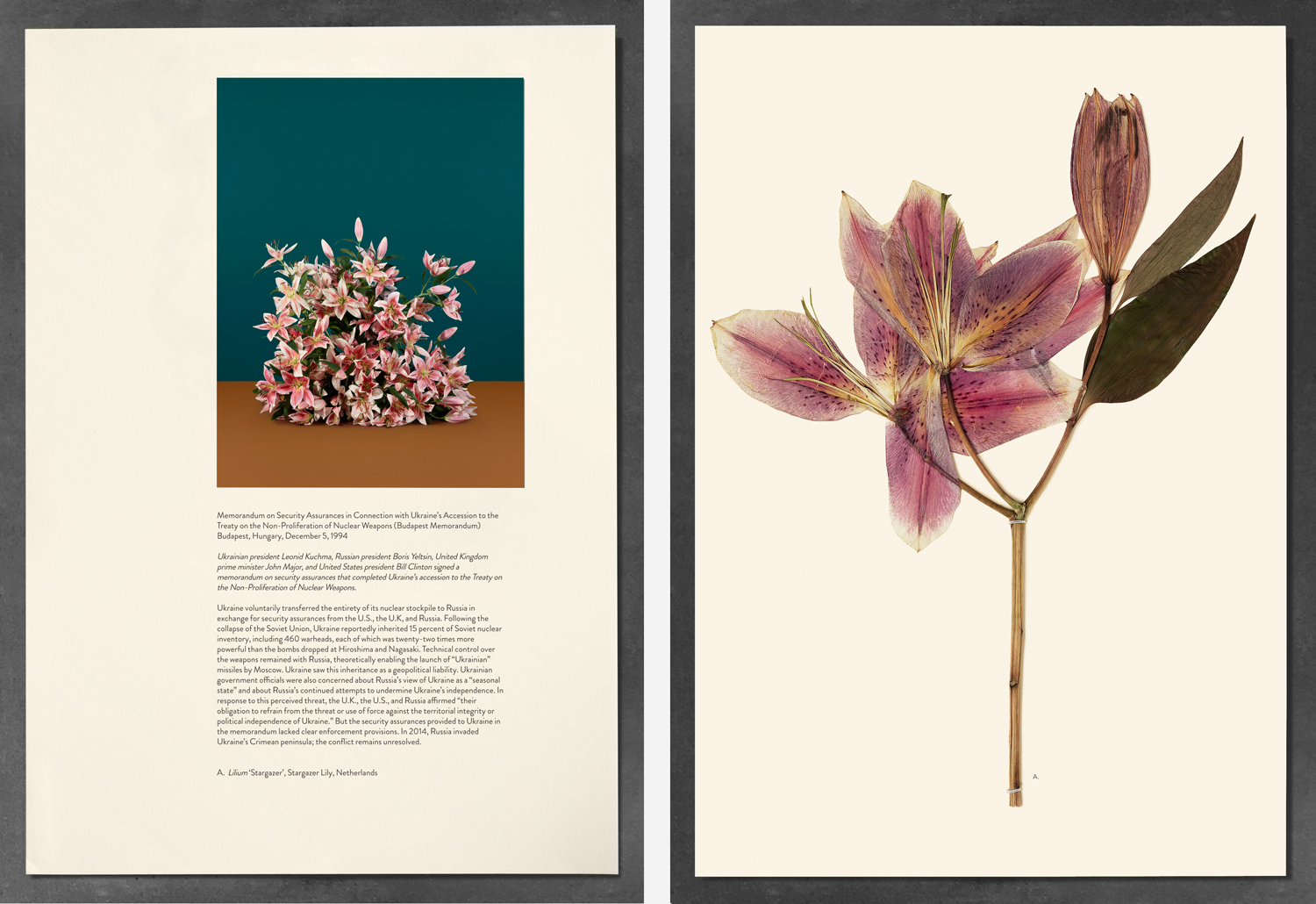 Memorandum on Security Assurances in Connection with Ukraine's Accession to the Treaty on the Non-Proliferation of Nuclear Weapons (Budapest Memorandum), Budapest, Hungary, December 5, 1994; Lilium 'Stargazer', Stargazer Lily, Netherlands. Paperwork and the Will of Capital, 2015.