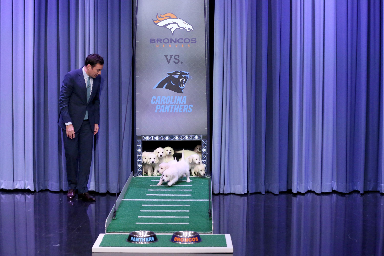 Jimmy Fallon during  Puppy Predictors: Super Bowl 50  on Feb. 4, 2016.