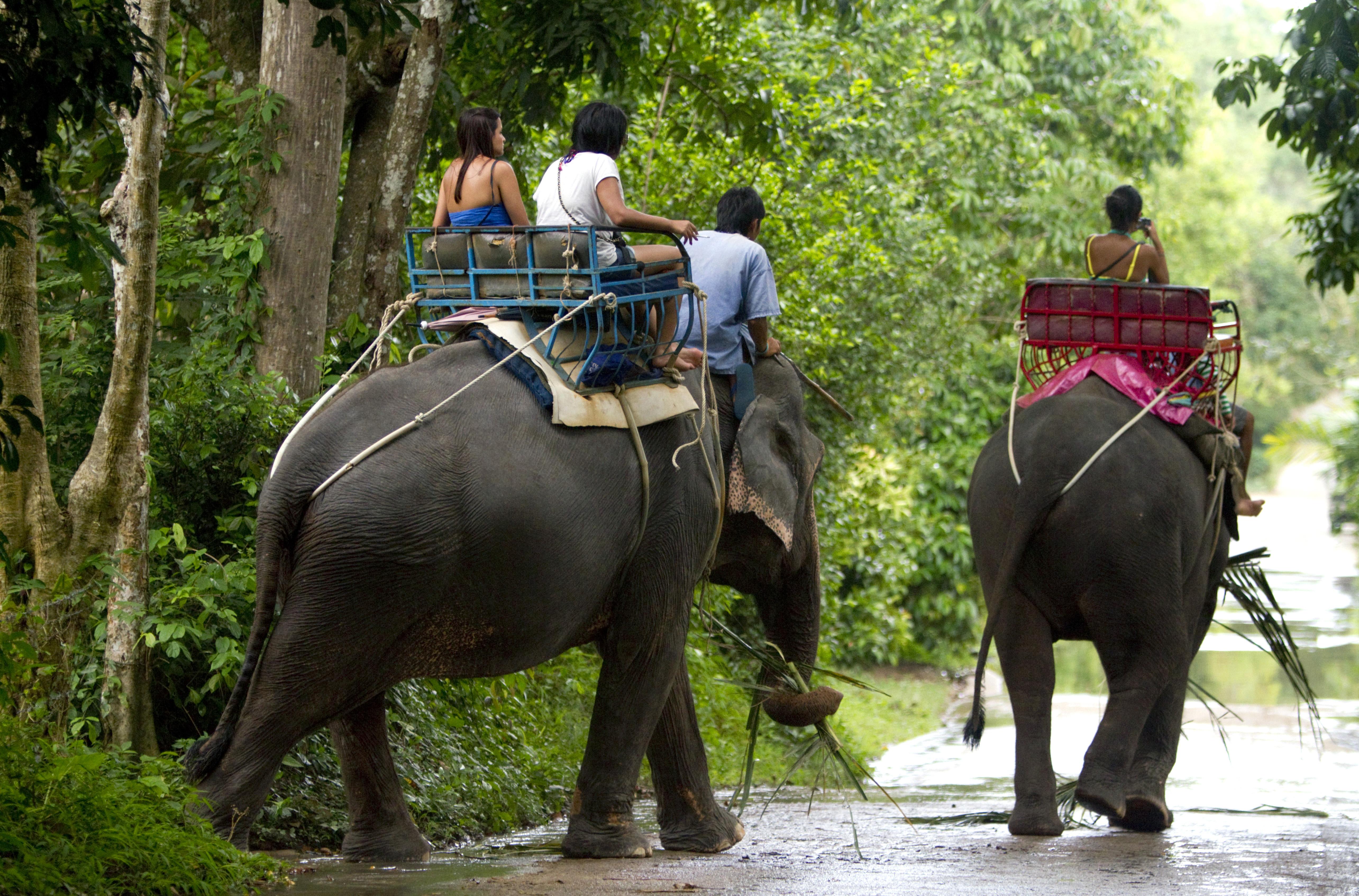 Tourists ride atop Asian elephants in Koh Samui, Thailand