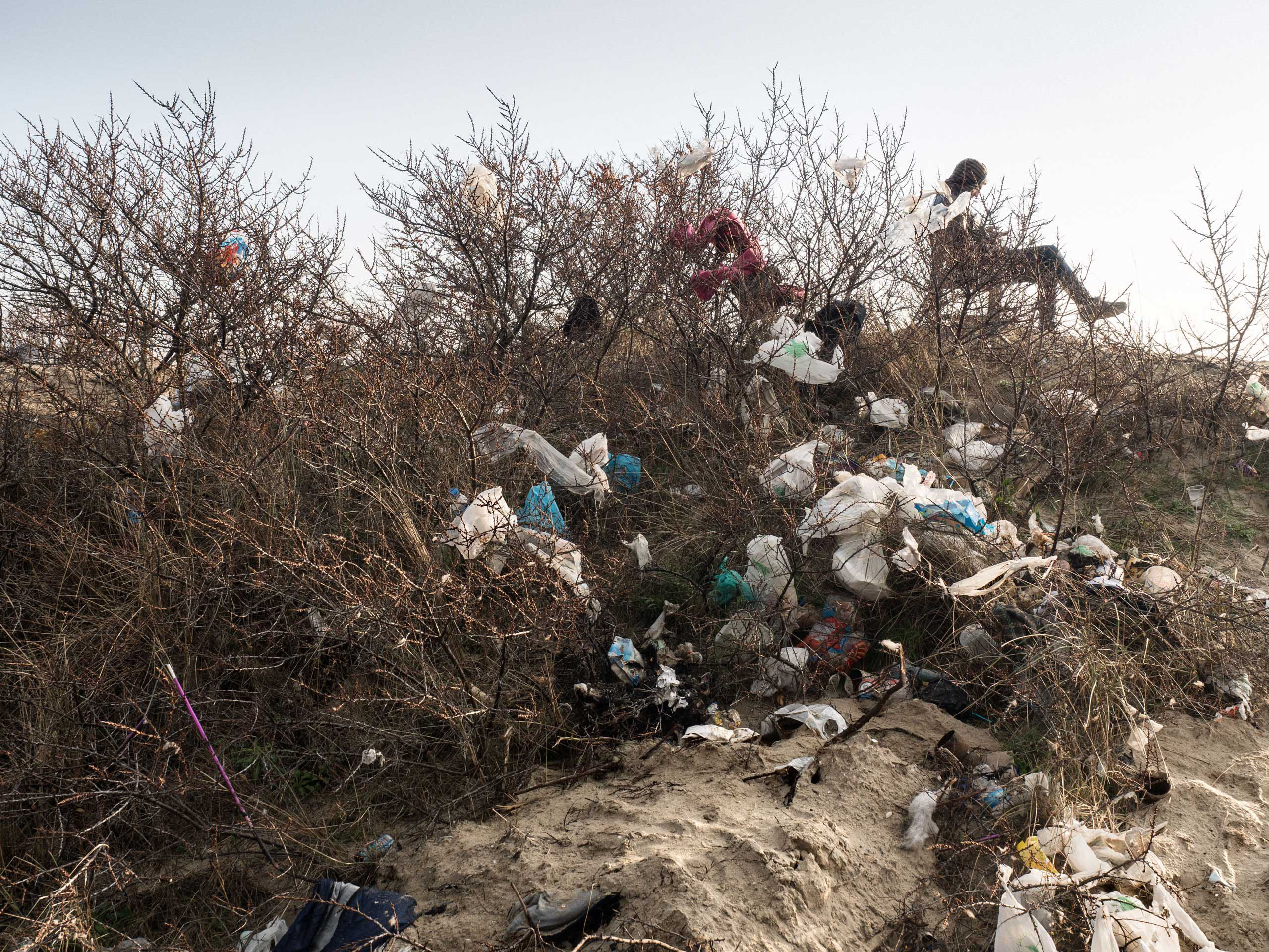 Trash collects on trees in the  jungle  of Calais, France, Jan. 20, 2016.