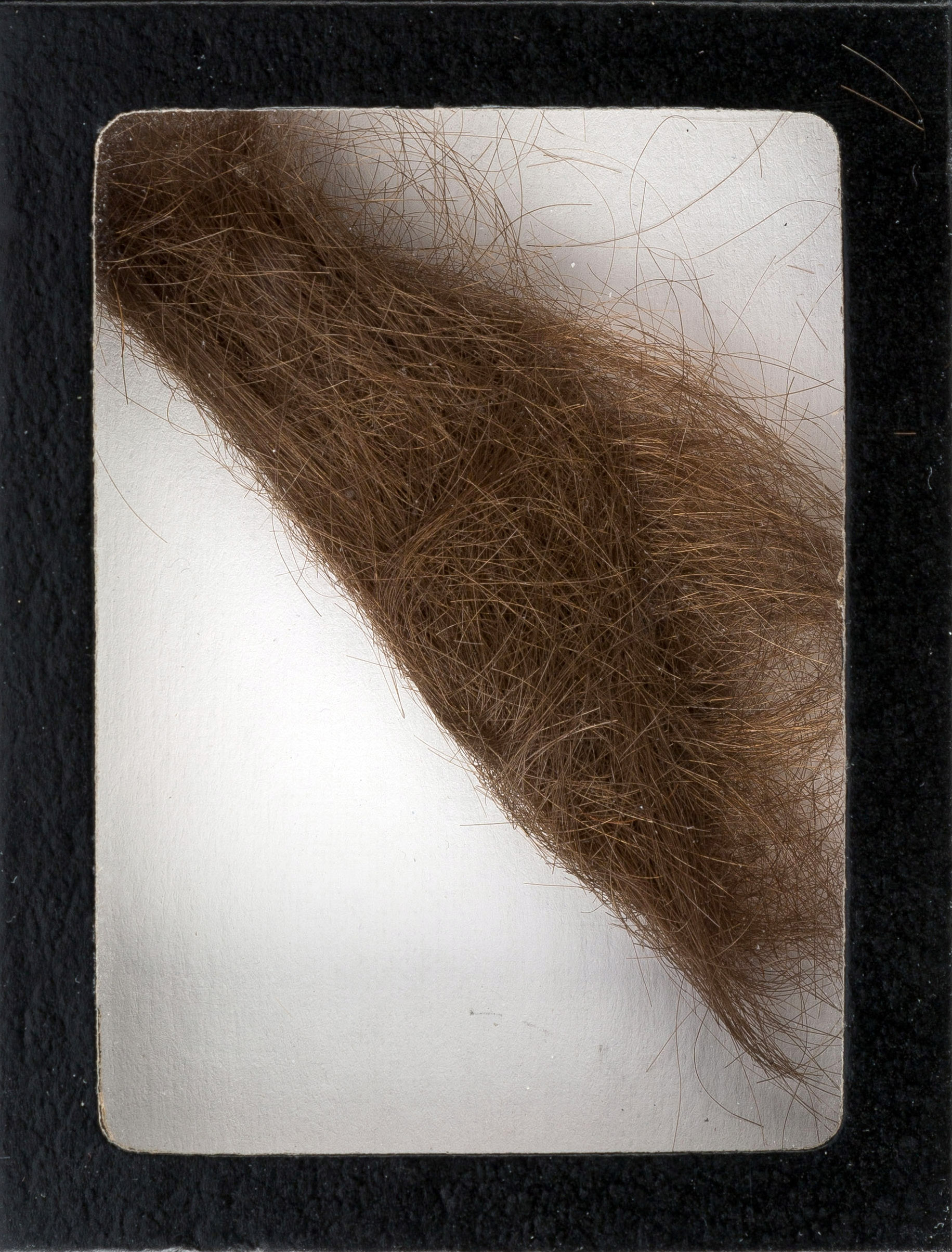 This photo provided by Heritage Auctions shows a 4-inch lock of John Lennon's hair that was collected by a German hairdresser before he started shooting  How I Won the War.  Heritage Auctions says the lock of hair is expected to sell for $10,000 at a Dallas auction later this month.