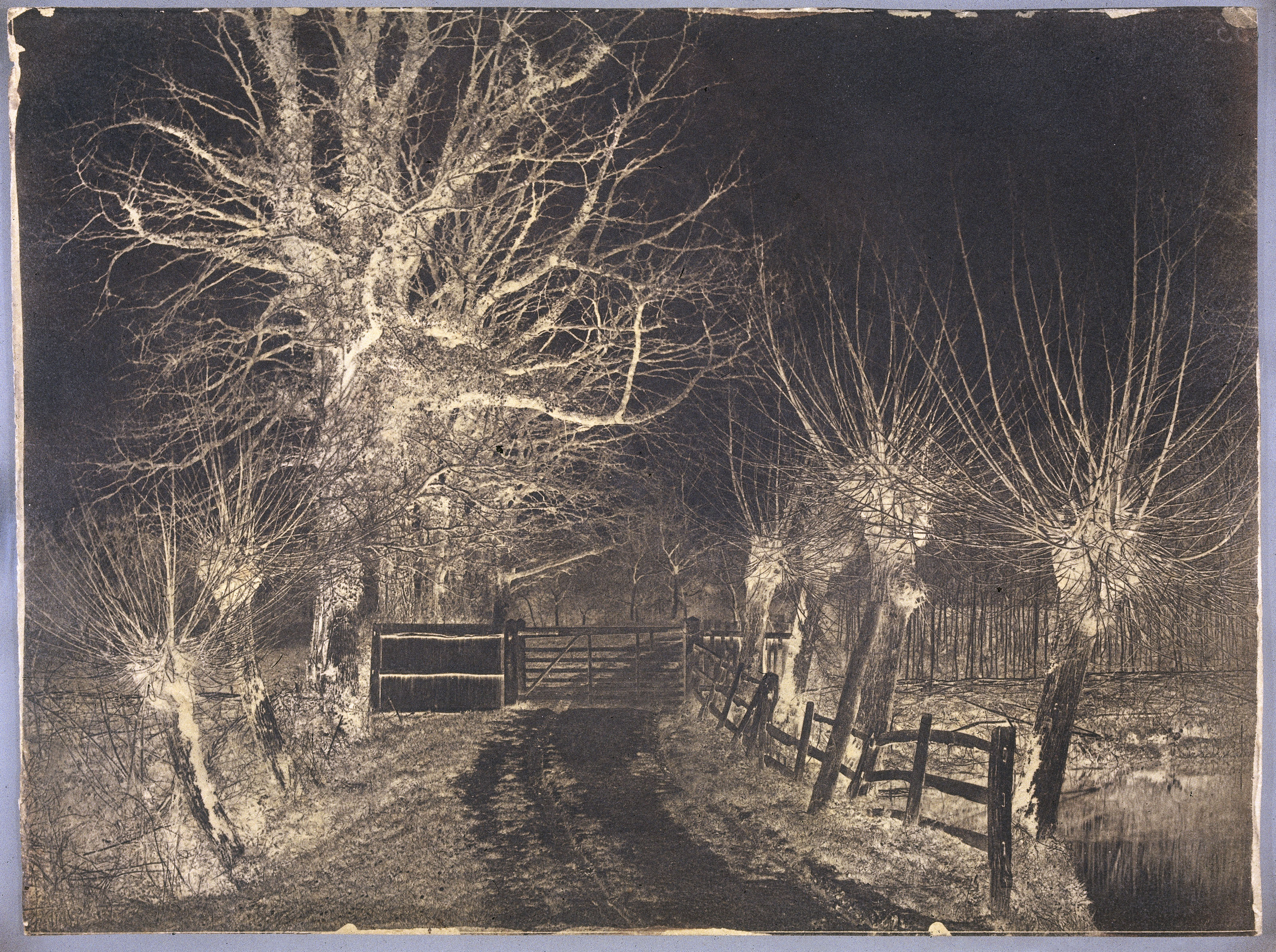 Bare trees, late 19th century.