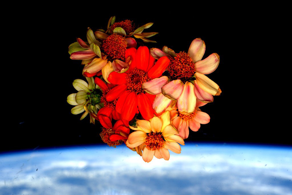 """Nursed the #SpaceFlowers all the way to today and now all that remains are memories. Happy #Valentines Day!""<a href=""https://twitter.com/StationCDRKelly/status/698917132801806336/photo/1"" target=""_blank"">—via Twitter</a> on Feb. 14, 2016."