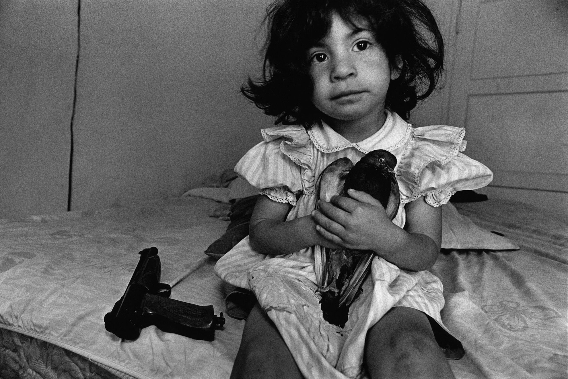 Donna De Cesare (1955 –)                               An author, documentary photographer and educator known for her groundbreaking coverage of the spread of US gangs in Central America.                                In this photograph, a three-year-old Esperanza named her pigeon after her wheelchair-bound teenage uncle. He was shot by a rival gang member in a drive-by shooting. Taken in Watts, Los Angeles, 1994.