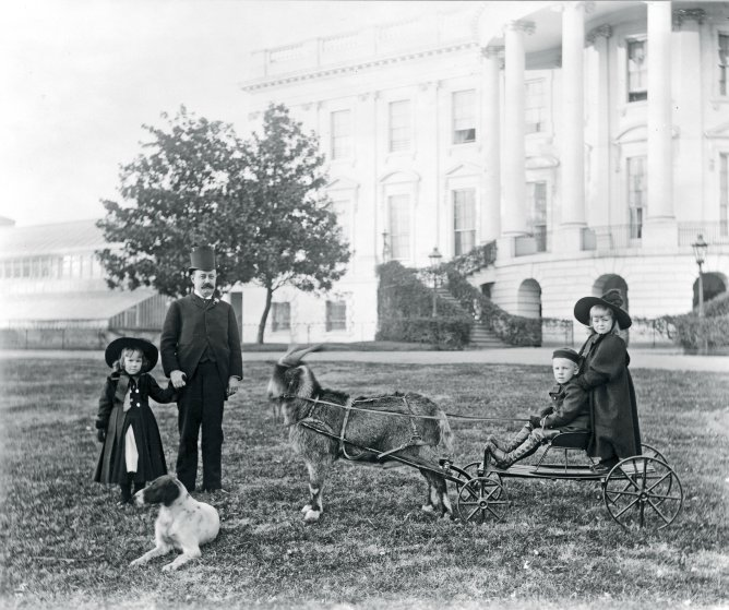 The extended Harrison family enjoyed the White House grounds with their pets and planted several trees.This photograph includes the president's son, Major Russell Harrison, and three grandchildren along with their goat, Old Whiskers, and one of their dogs.