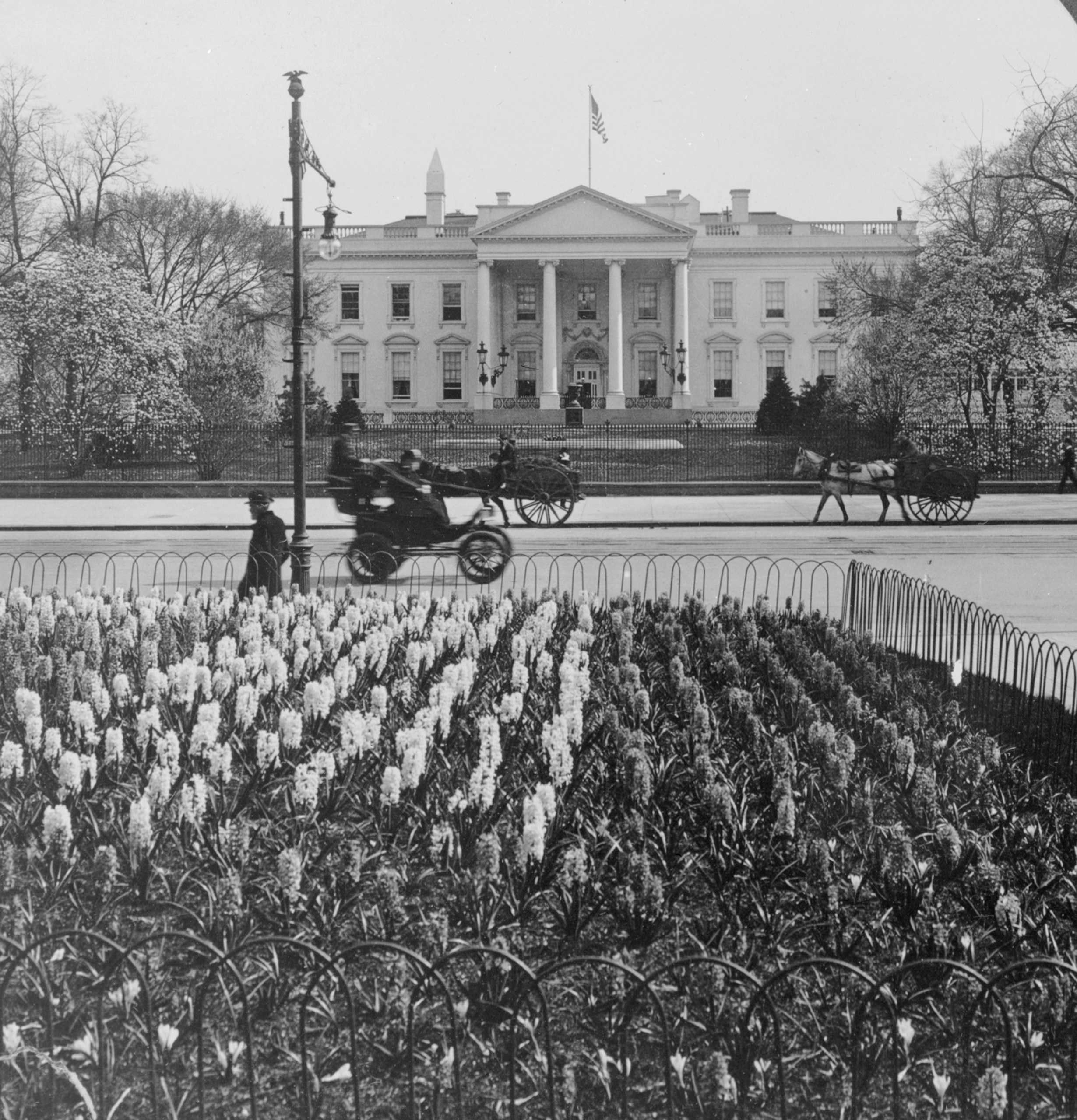 Horse-drawn and motorized vehicles join pedestrians in front of 1600 Pennsylvania Avenue. Hyacinths fill a bed in Lafayette Park and magnolias bloom on the North Lawn across the street. During the Taft administration.