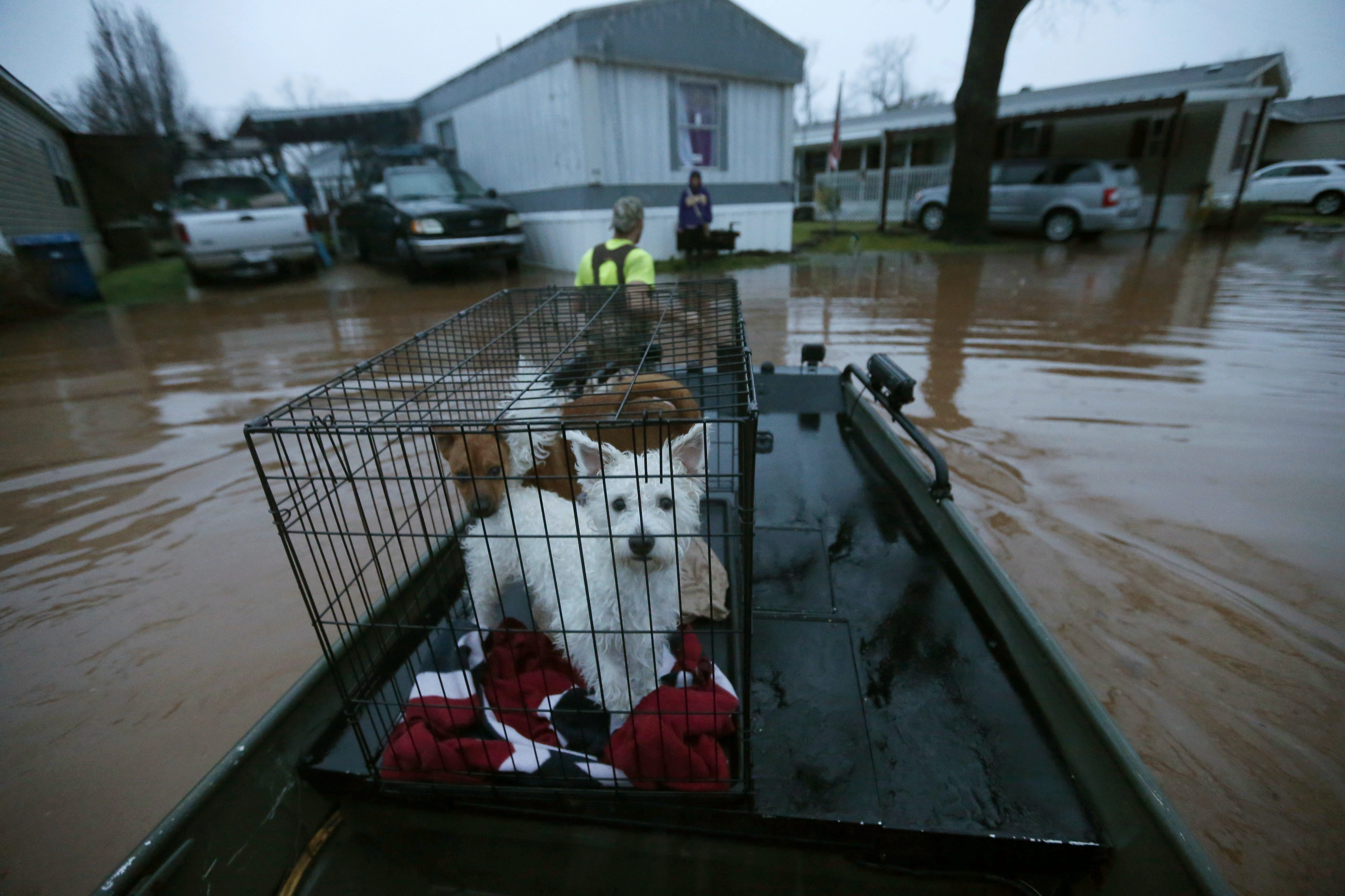 Sam Breen helps his friend retrieve his dogs Edison and Allie from his home, as floodwater rises at the Pecan Valley Estates trailer park in Bossier City, La., March 9, 2016