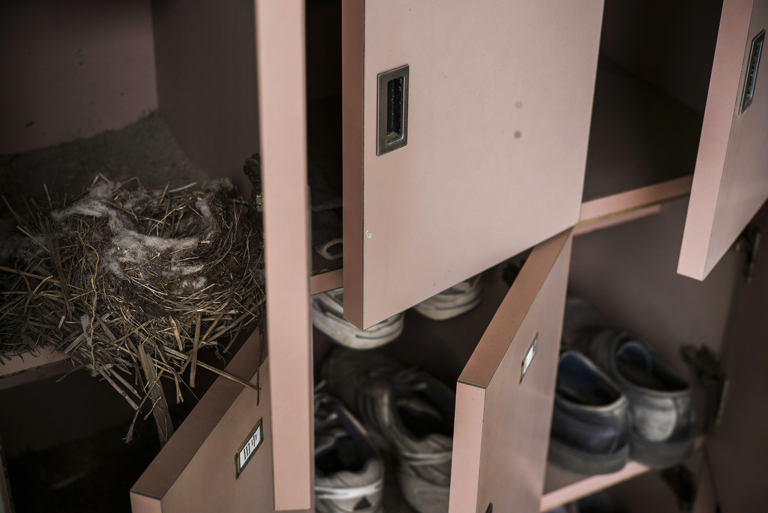 A birds nest can be seen inside a locker at a Ukedo elementary school, which was damaged by the tsunami, inside the restricted 20km exclusion zone, Namie, March 10, 2016.
