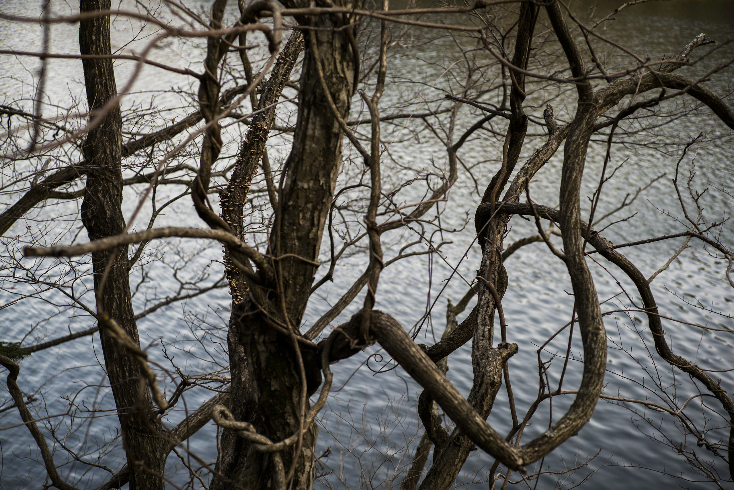 A tree hovers over a lake that was contaminated by the disaster at the Fukushima Daiichi nuclear power plant, Minamisoma, Japan, March 8, 2016.