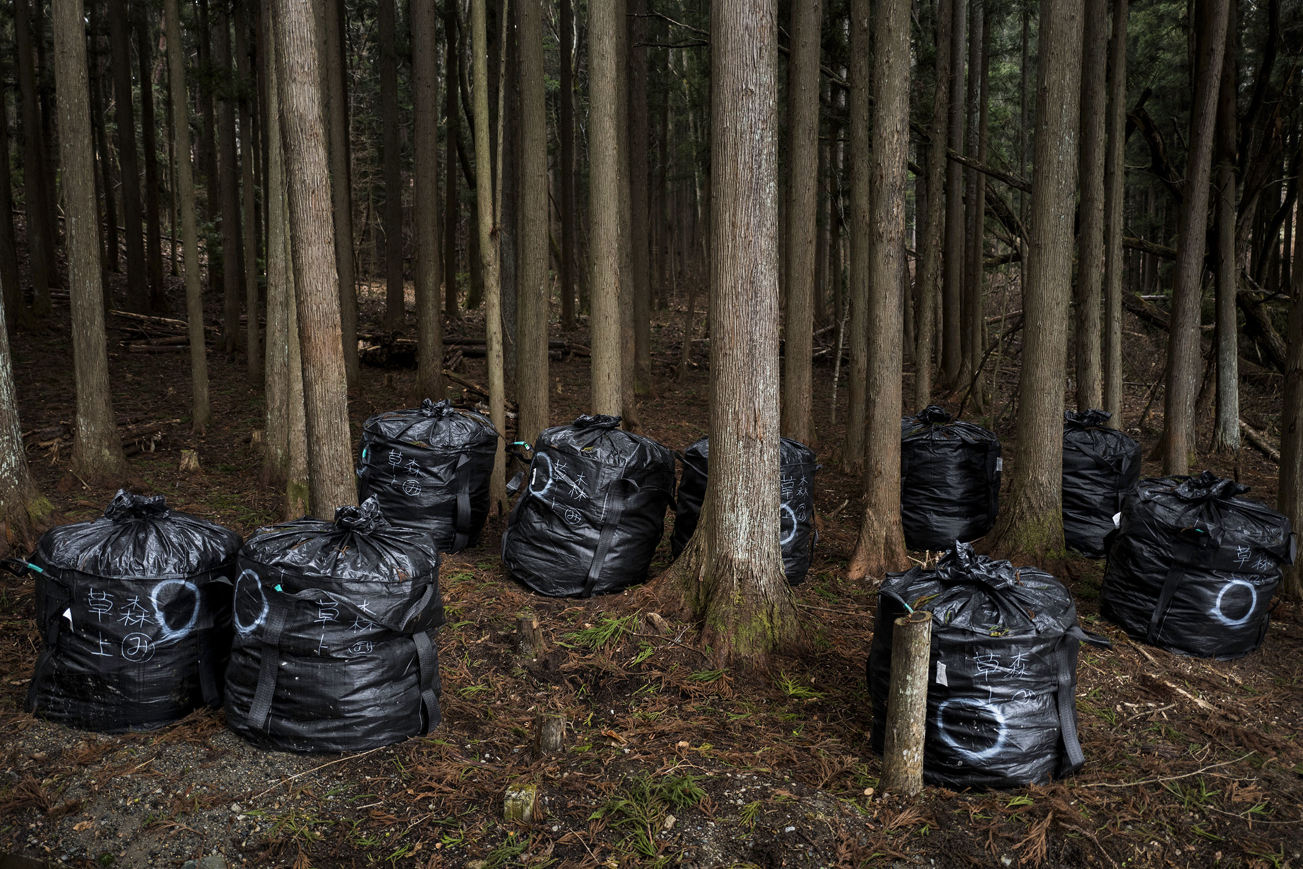 Decontamination bags are seen in the woods of Itate, Fukushima, Japan, March 7, 2016.