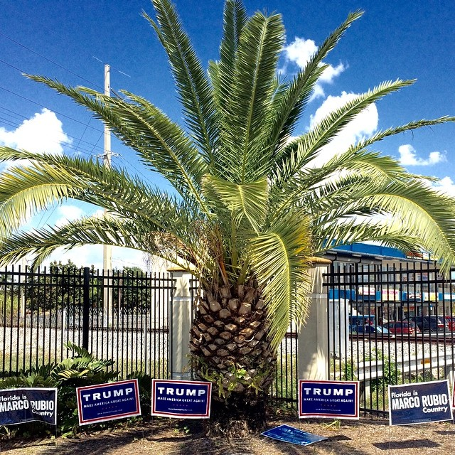Campaign signs in support of Republican presidential candidate Donald Trump are posted at Robert King High Park in Miami on March 15.