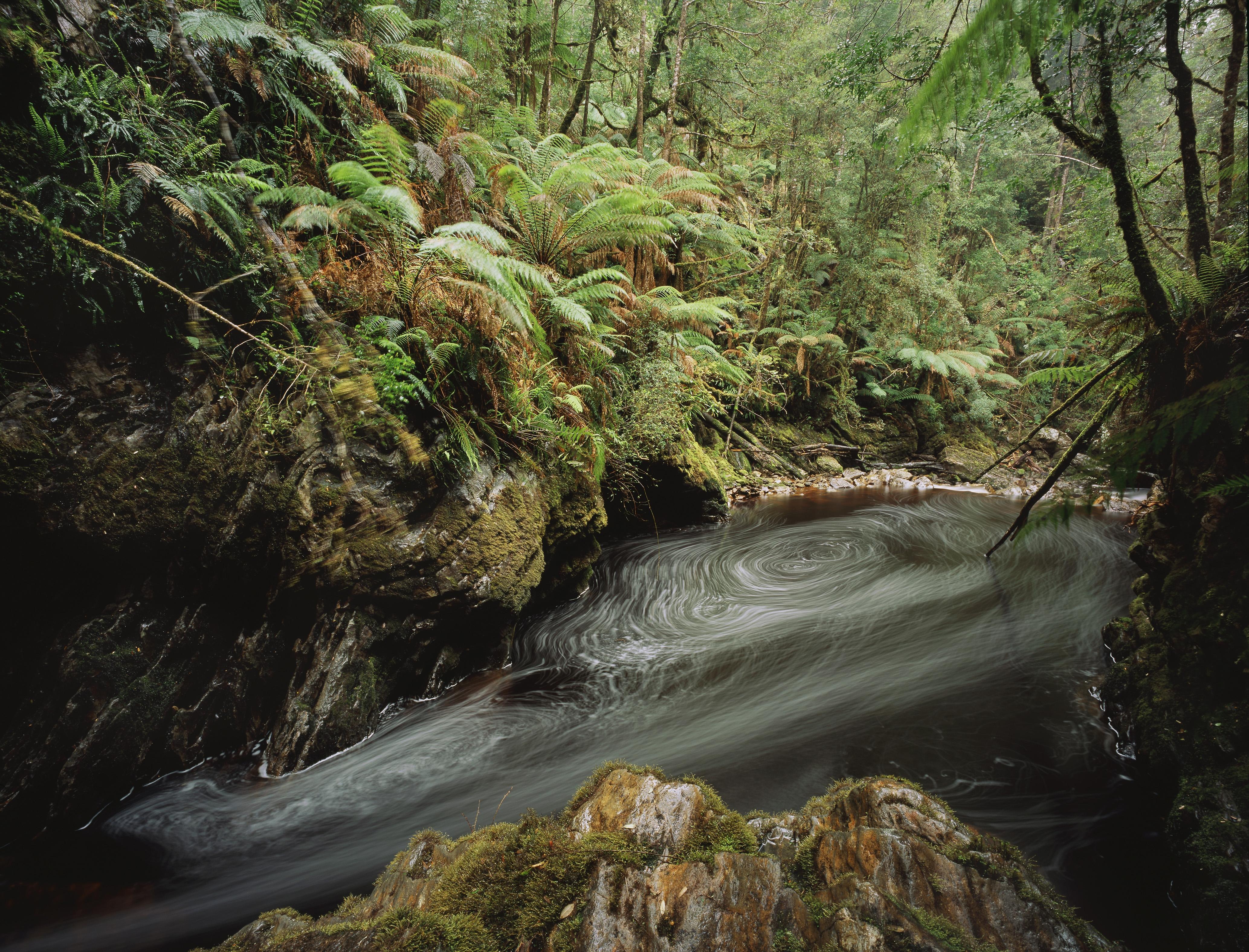 Eddies in the Bird River running through temperate rainforest, Western Tasmania, Australia