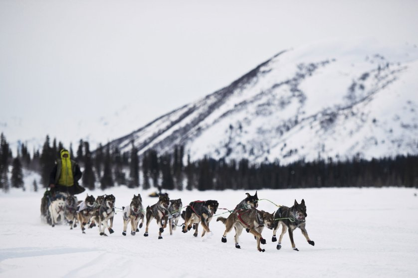 Nicolas Petit is the first Iditarod Trail Sled Dog Race musher to reach the Rainy Pass checkpoint on March 7 in-Rainy Pass, Alaska.