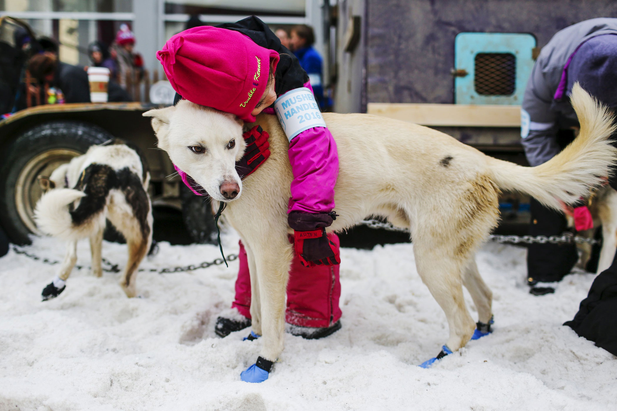 A handler with Alan Eischen's team embraces one of Eischen's dogs before the ceremonial start of the Iditarod Trail Sled Dog Race in Anchorage, Alaska on March 5.