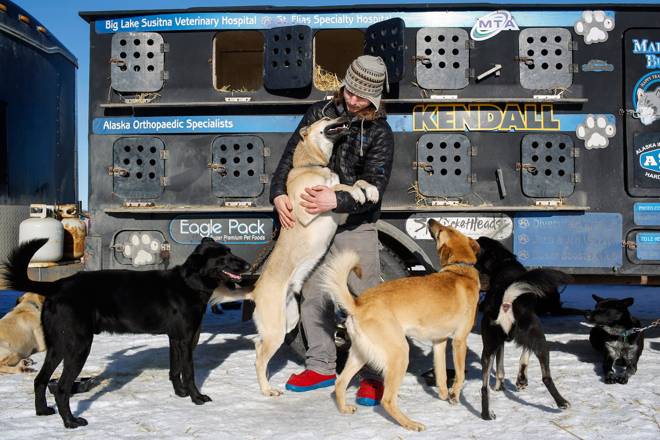 Champion musher Martin Buser's son, Rohn, greets dogs from his dad's team before the restart of the Iditarod Trail Sled Dog Race in Willow, Alaska on March 6.
