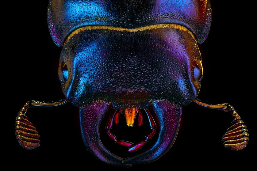 Macro photos of insects, Moscow, Russia - Mar 2016
