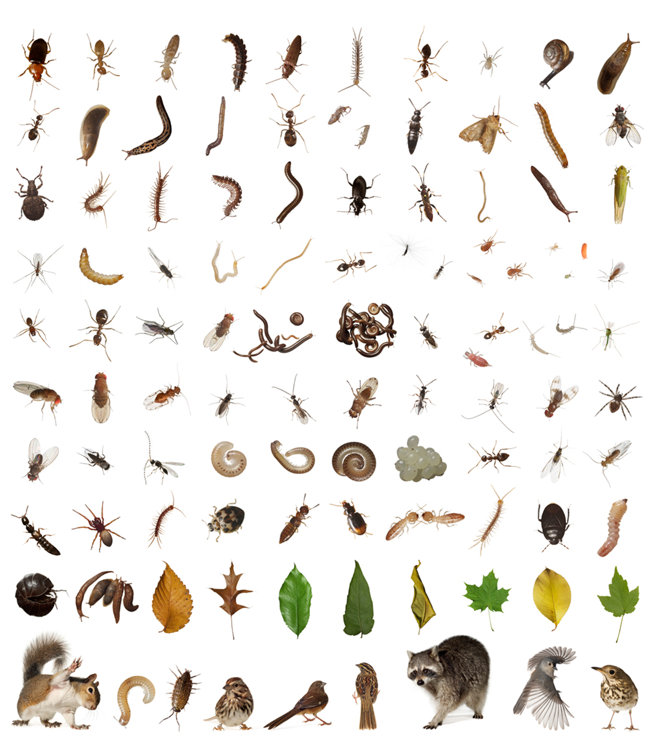 A selection of creatures revealed through inventorying one cubic foot from Hallett Nature Sanctuary in Central Park, New York City.