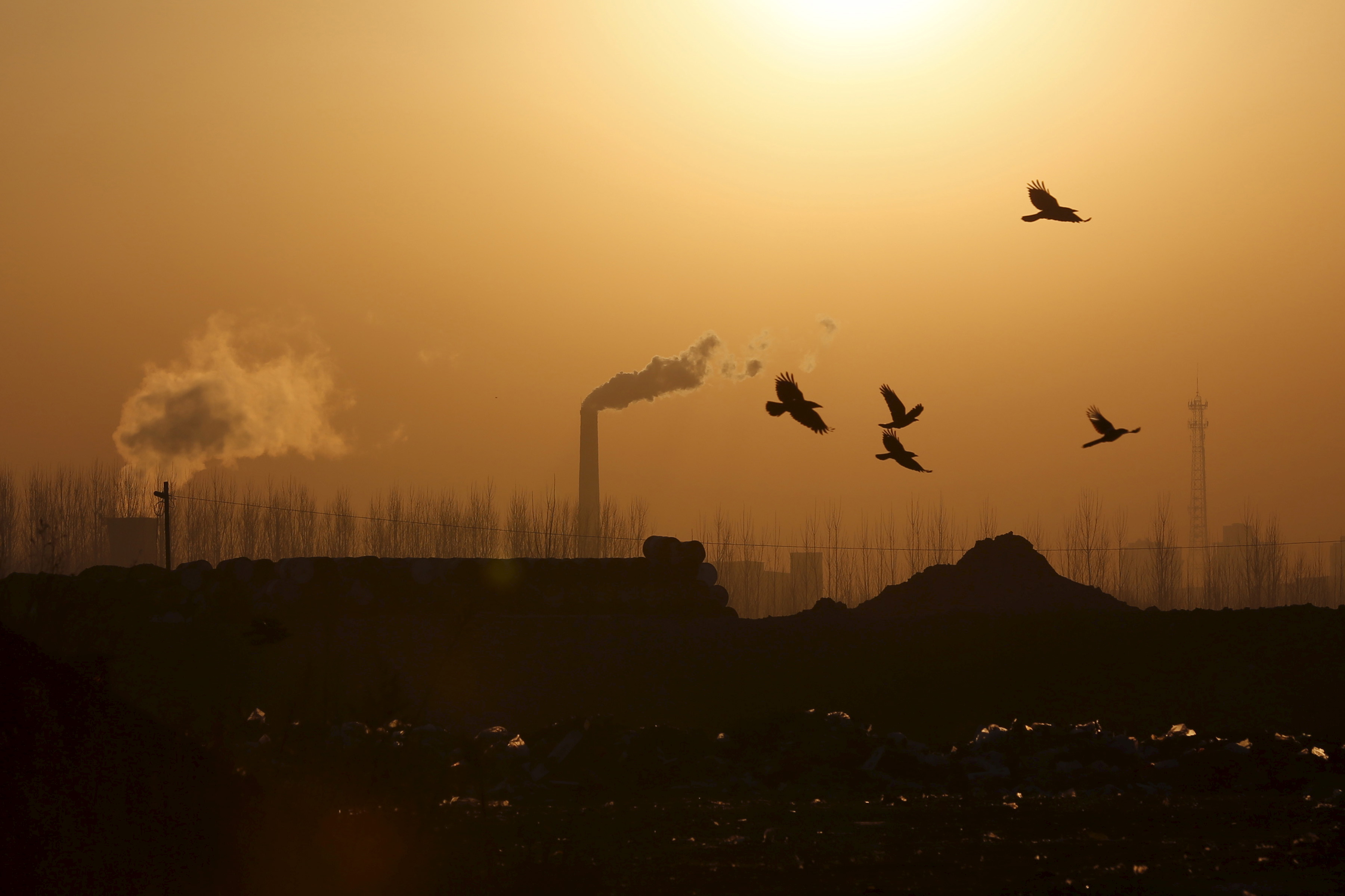 Birds fly over a closed steel factory in Tangshan, China, on Feb. 27, 2016
